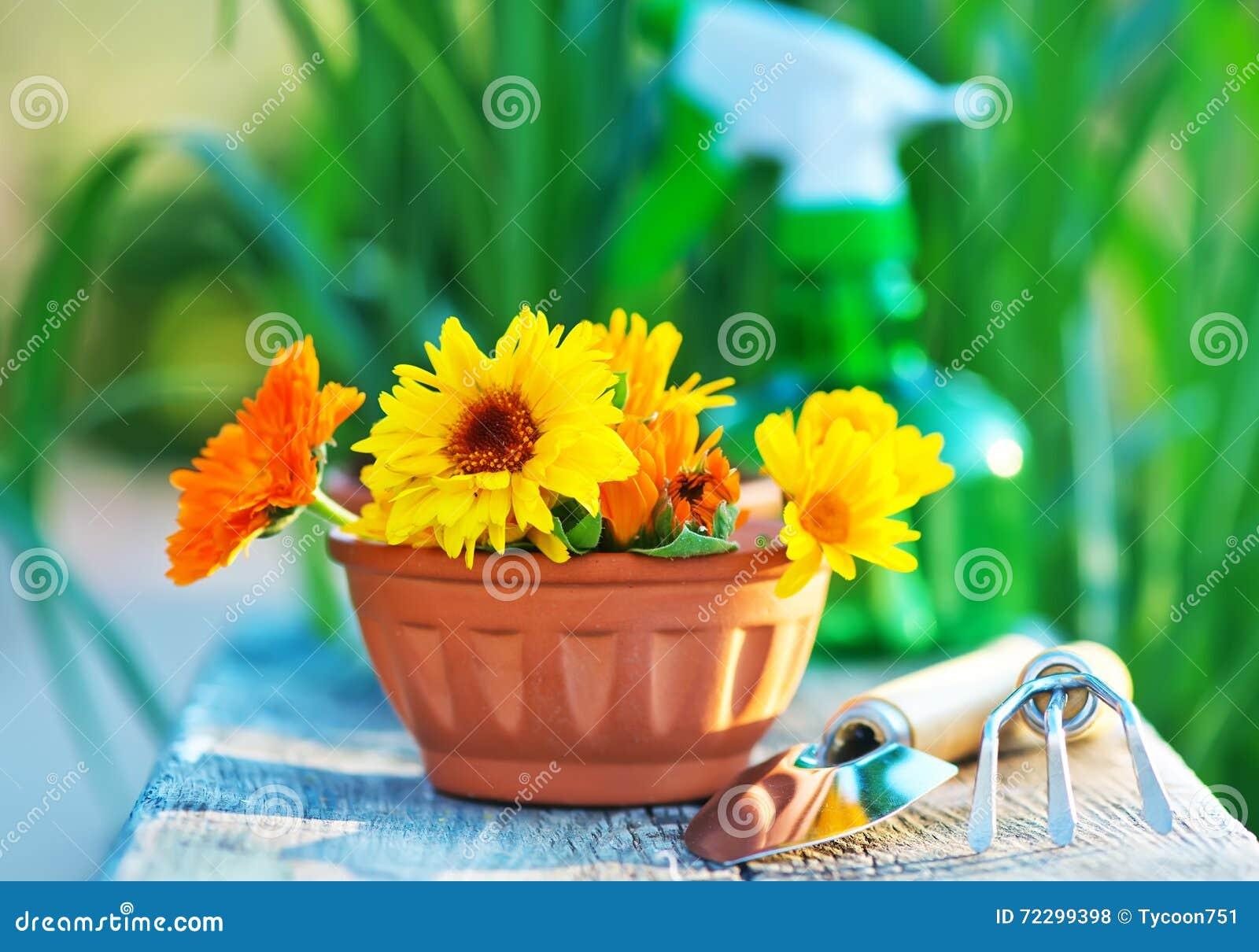 Download инструменты весеннего времени сада садовничая Стоковое Фото - изображение насчитывающей различно, лопаткоулавливатель: 72299398