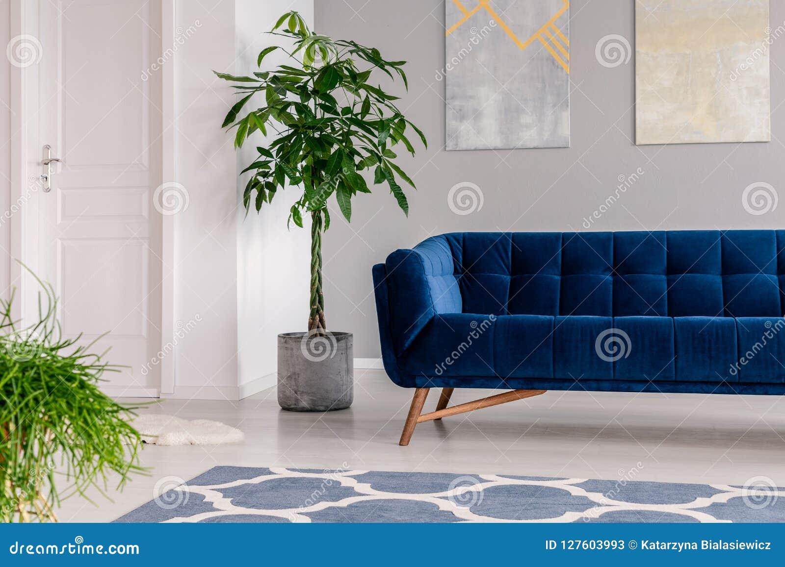 Интерьер зала ожидания в роскошной клинике обеспеченной с софой бархата синей, половиком и зелеными растениями Реальное фото