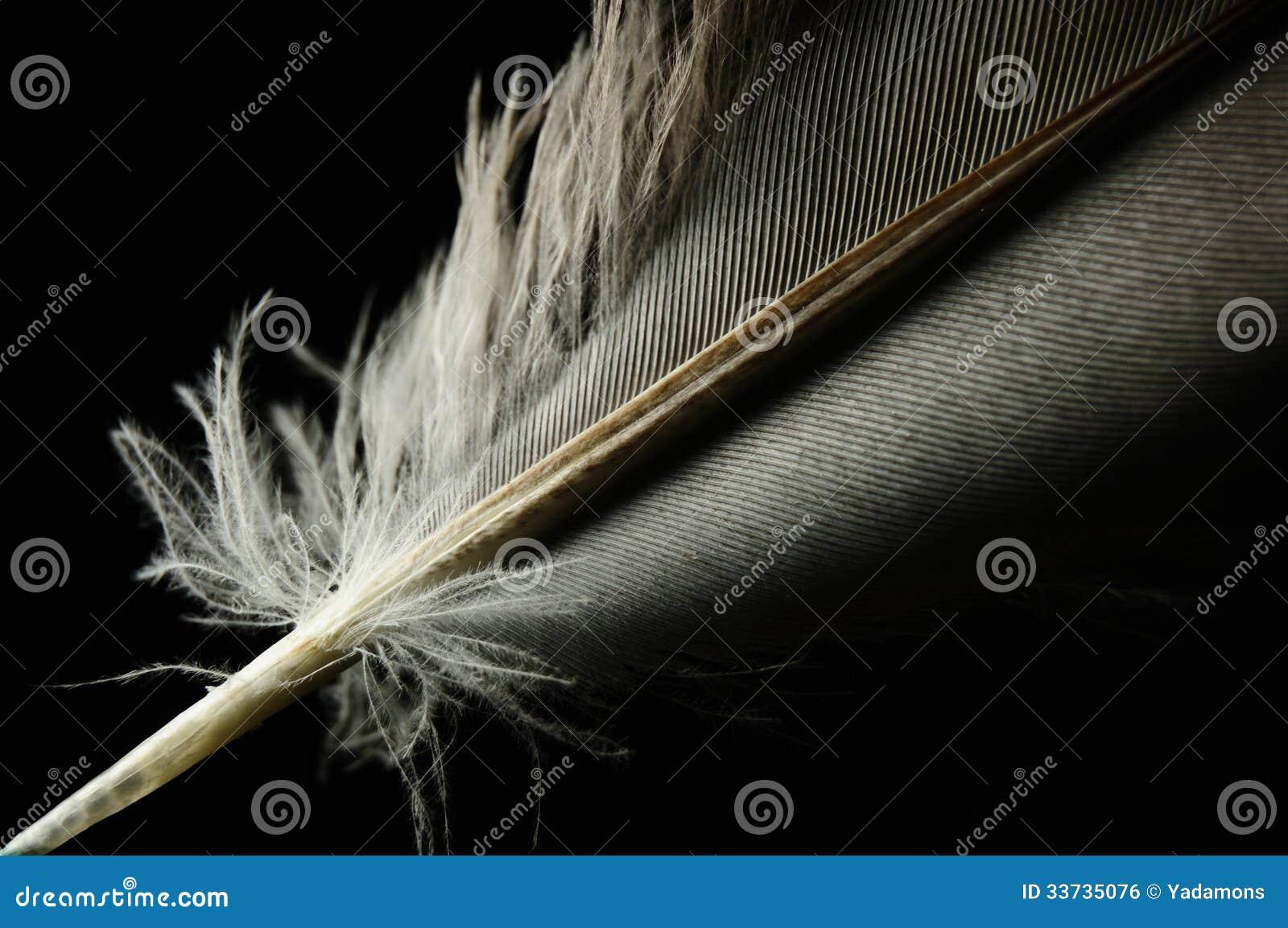 Индивидуал пера птицы конца-вверх