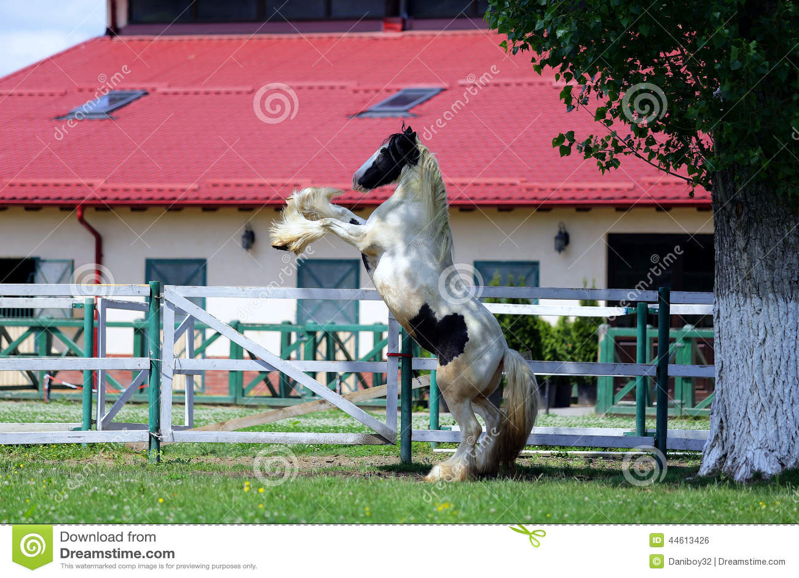 Индийская лошадь