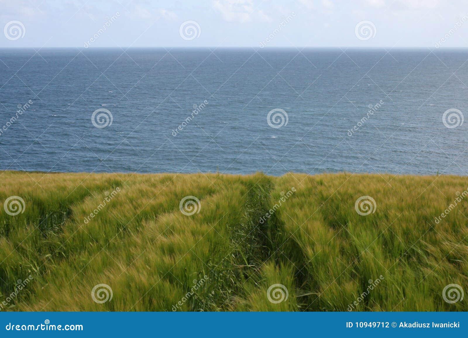 Ирландская рож вверх океаном
