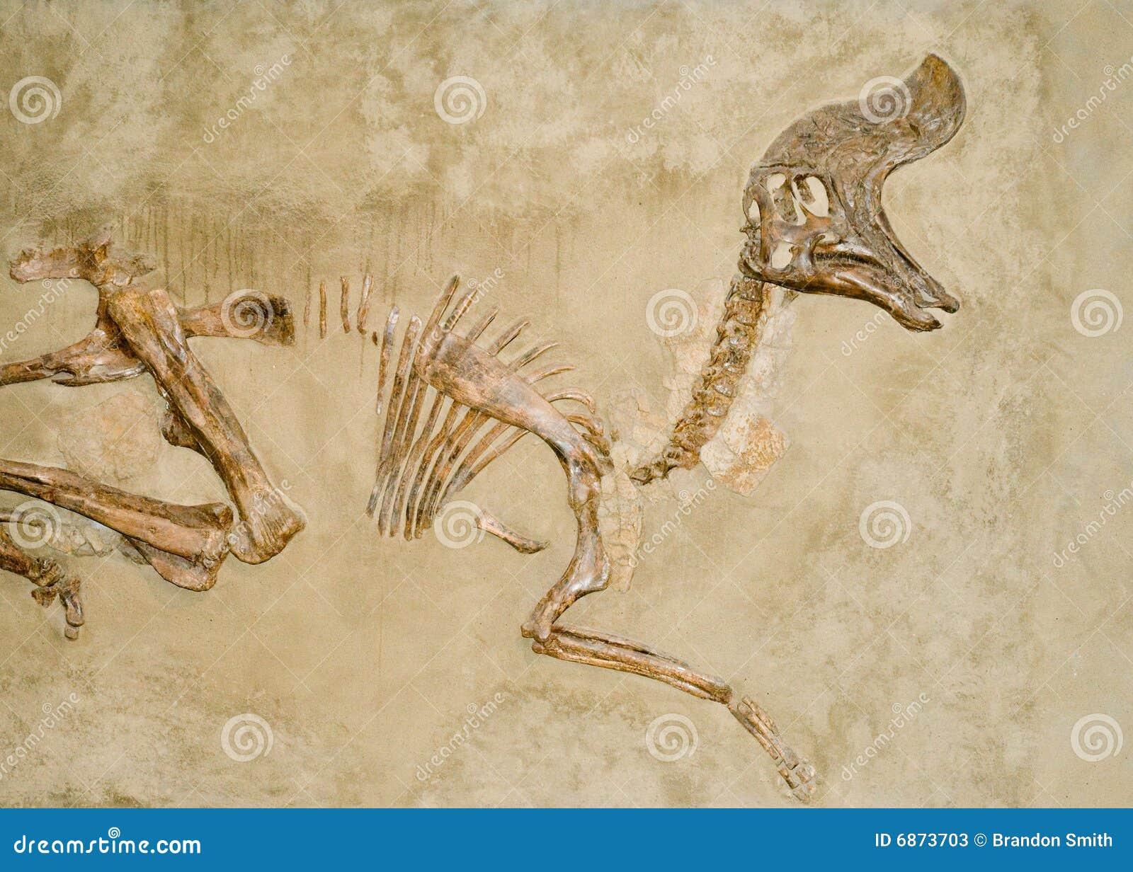 ископаемые динозавра