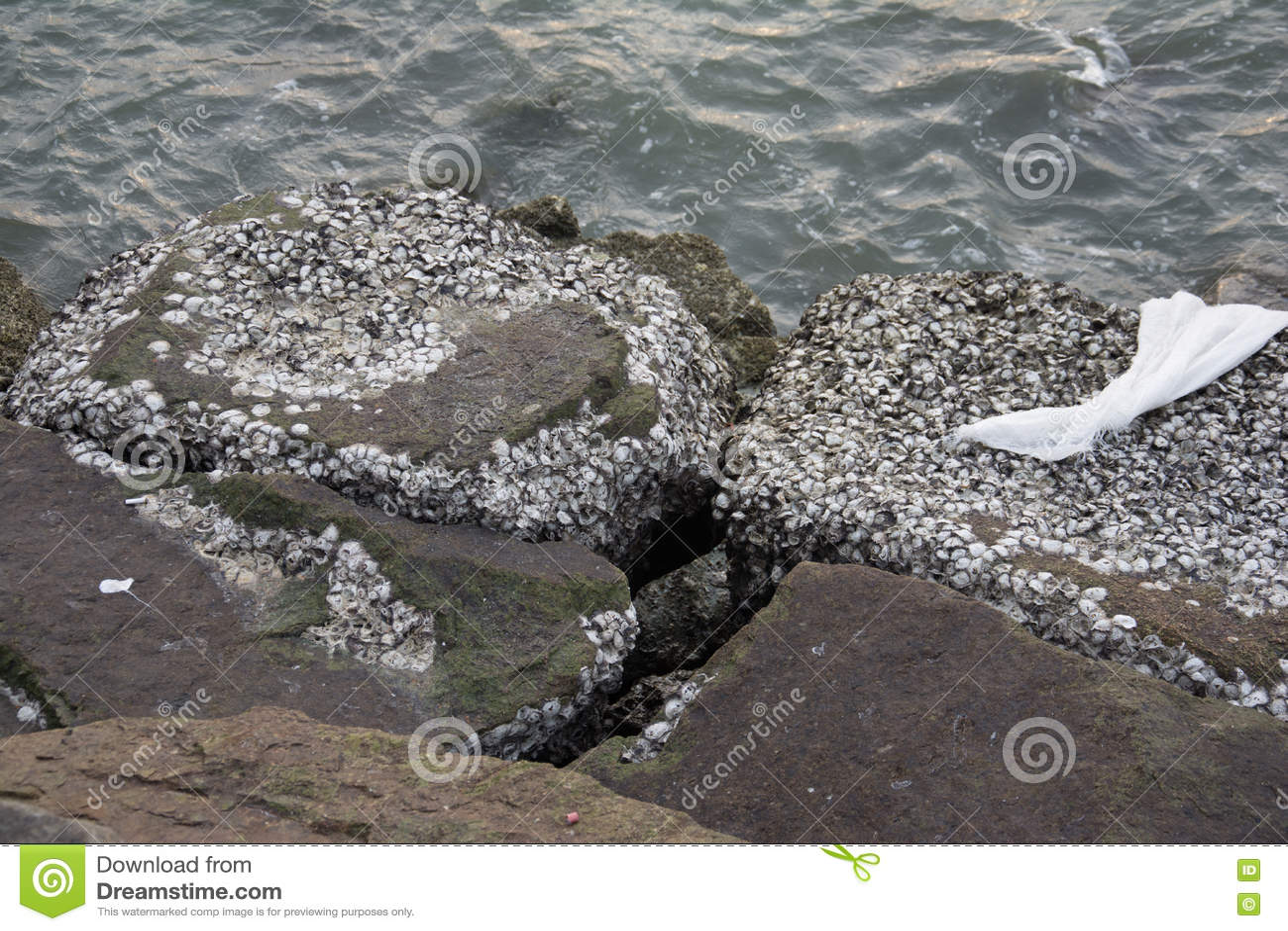 Ископаемый пляж раковины