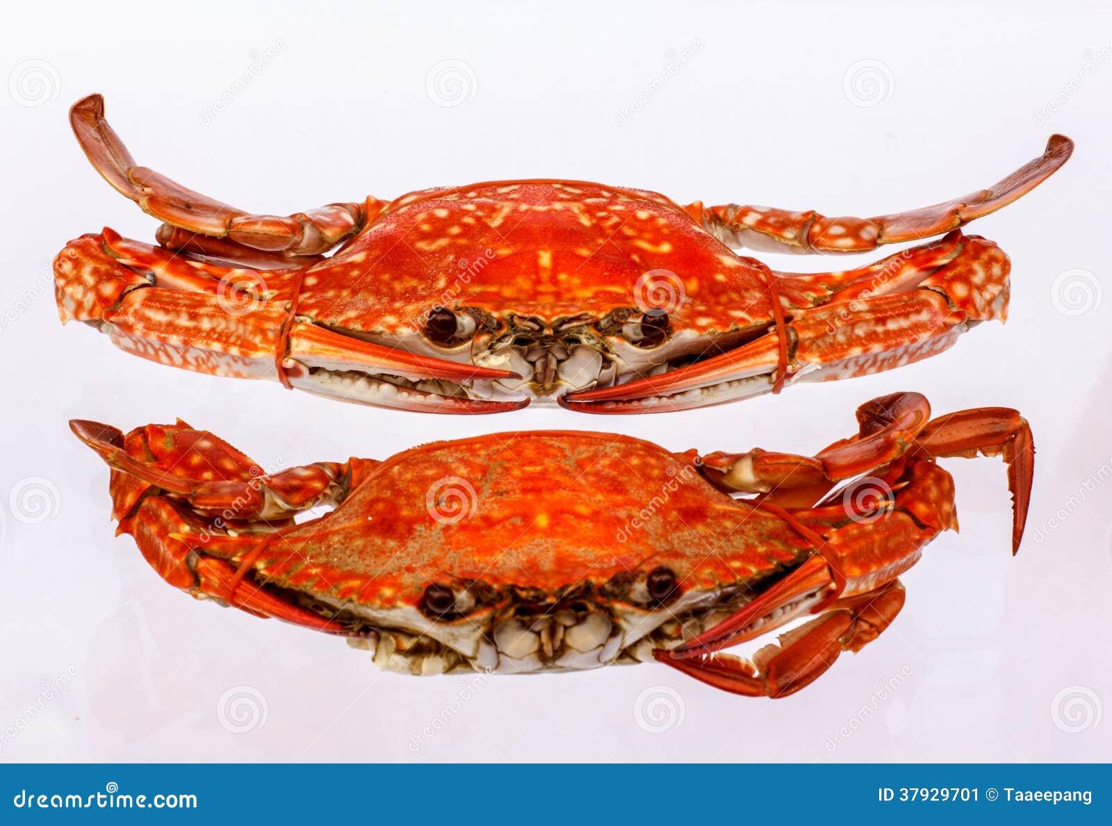 2 испаренный краб моря в блюде