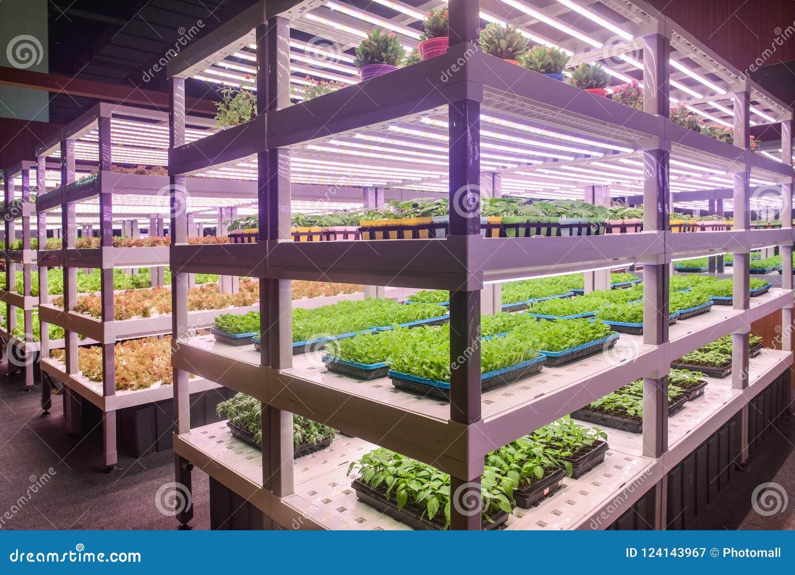 Используемая лампа приведенная выращивания растения на саженце