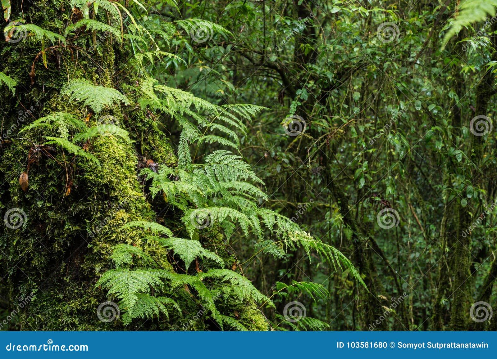 Исследуйте предпосылку дождевого леса с зелеными мхами и папоротником