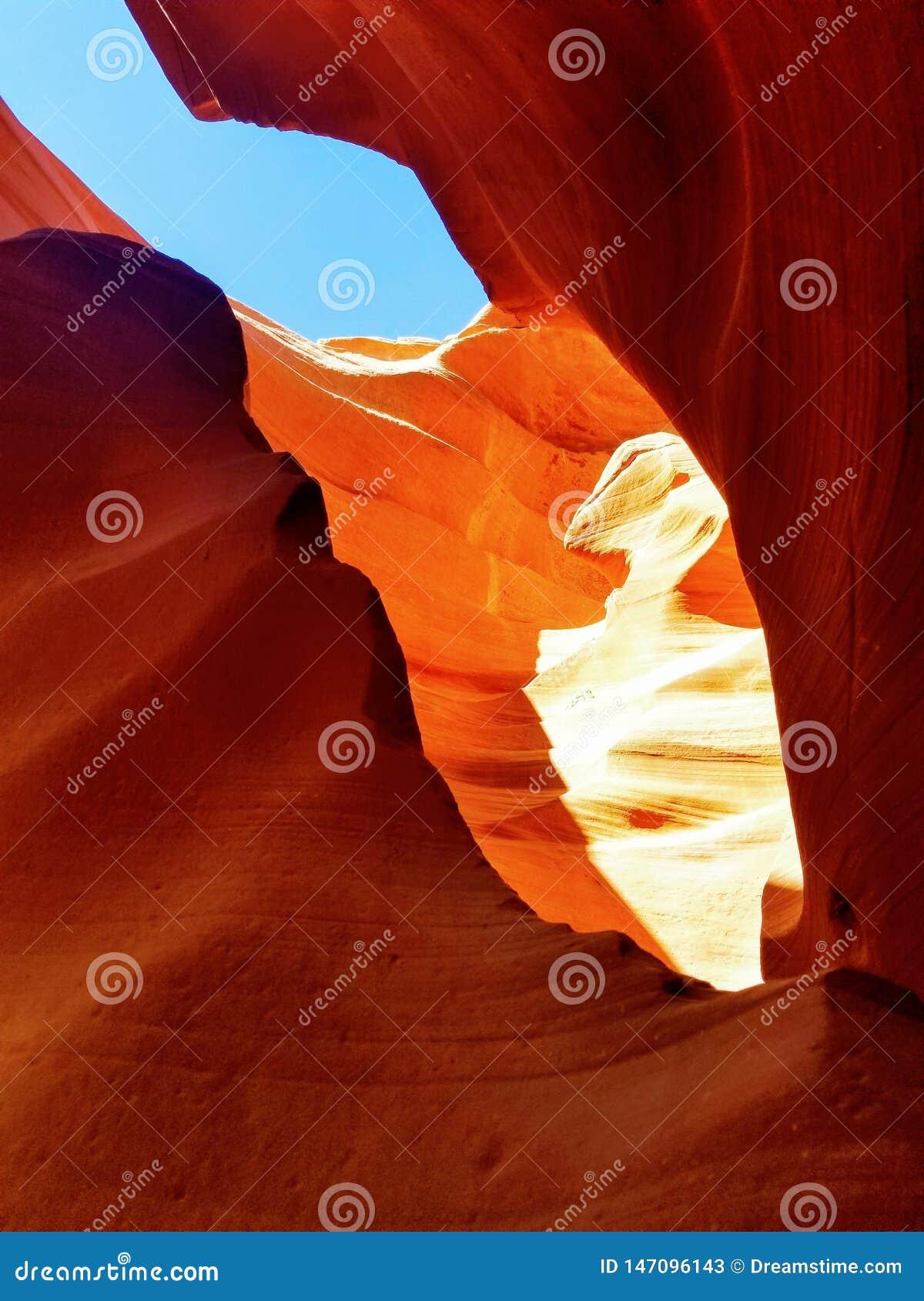 Исследуя каньон Аризона США антилопы