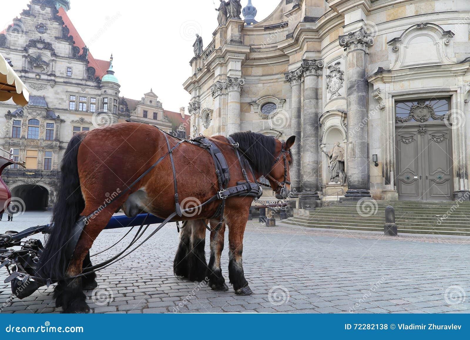 Download Исторический центр Дрездена (ориентир ориентиров), Германии Стоковое Фото - изображение насчитывающей rococo, зодчества: 72282138