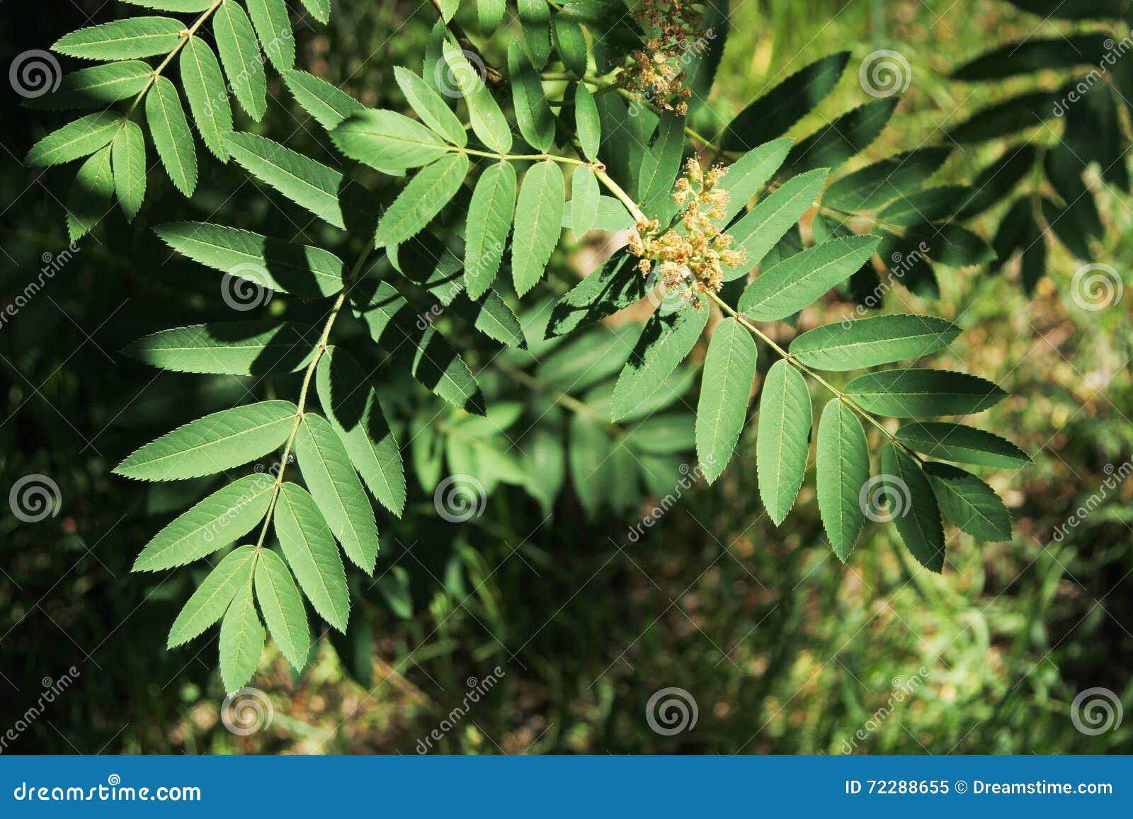 Download листья зеленого цвета стоковое изображение. изображение насчитывающей вал - 72288655