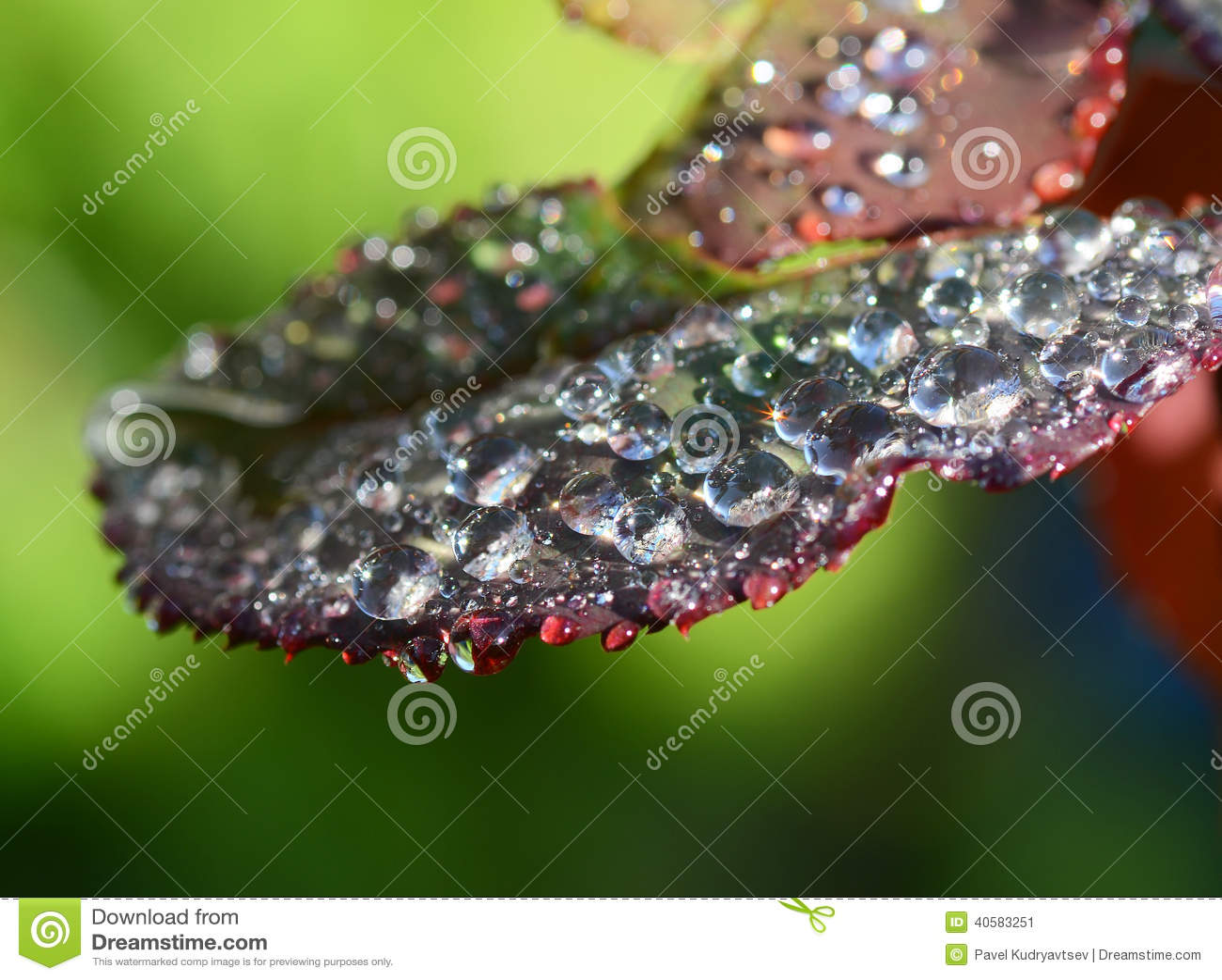 листья падений росы