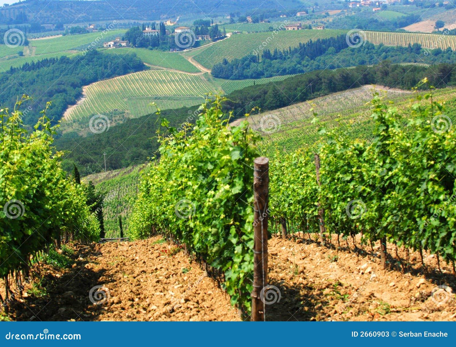 итальянские виноградники