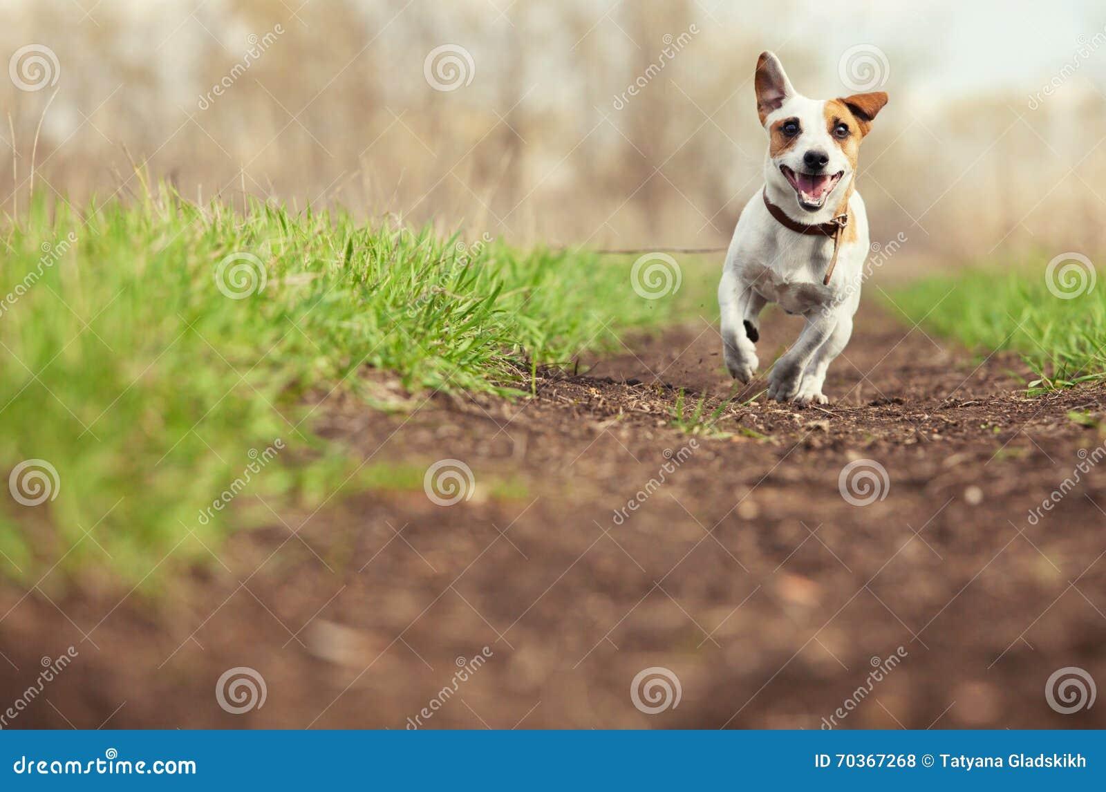 Идущая собака на лете
