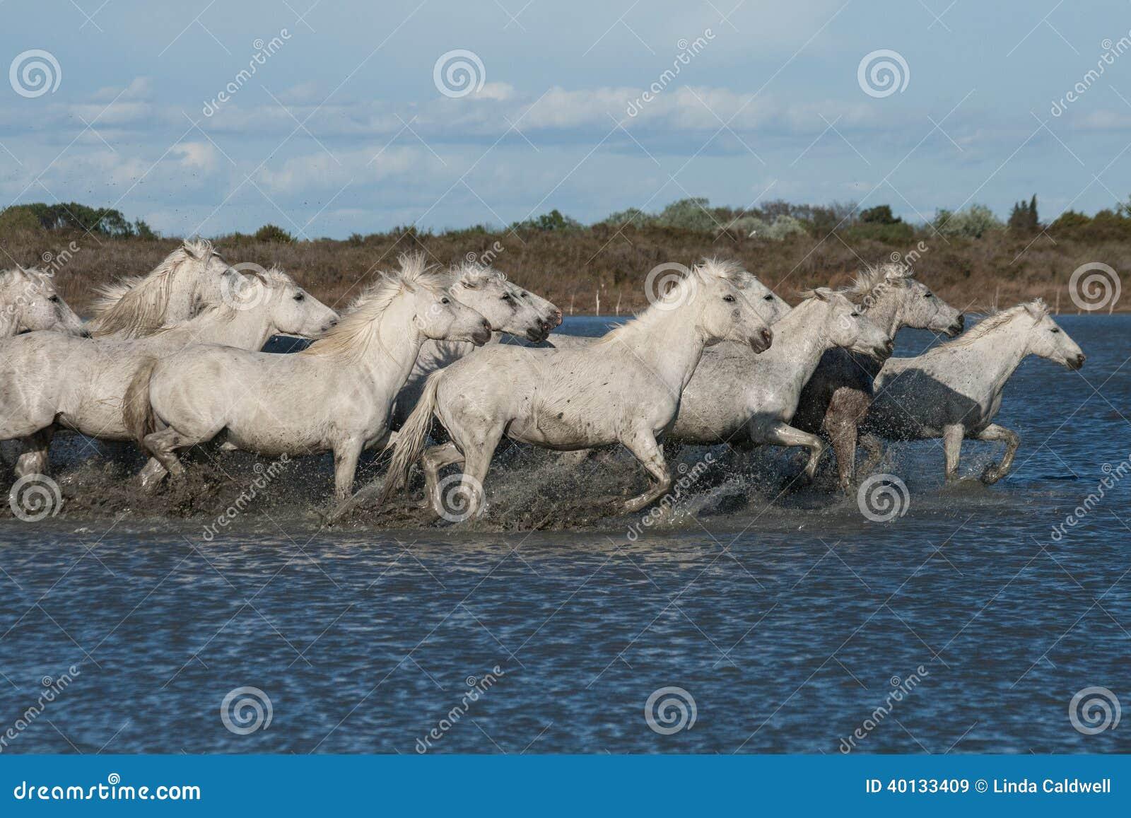 Идущие лошади