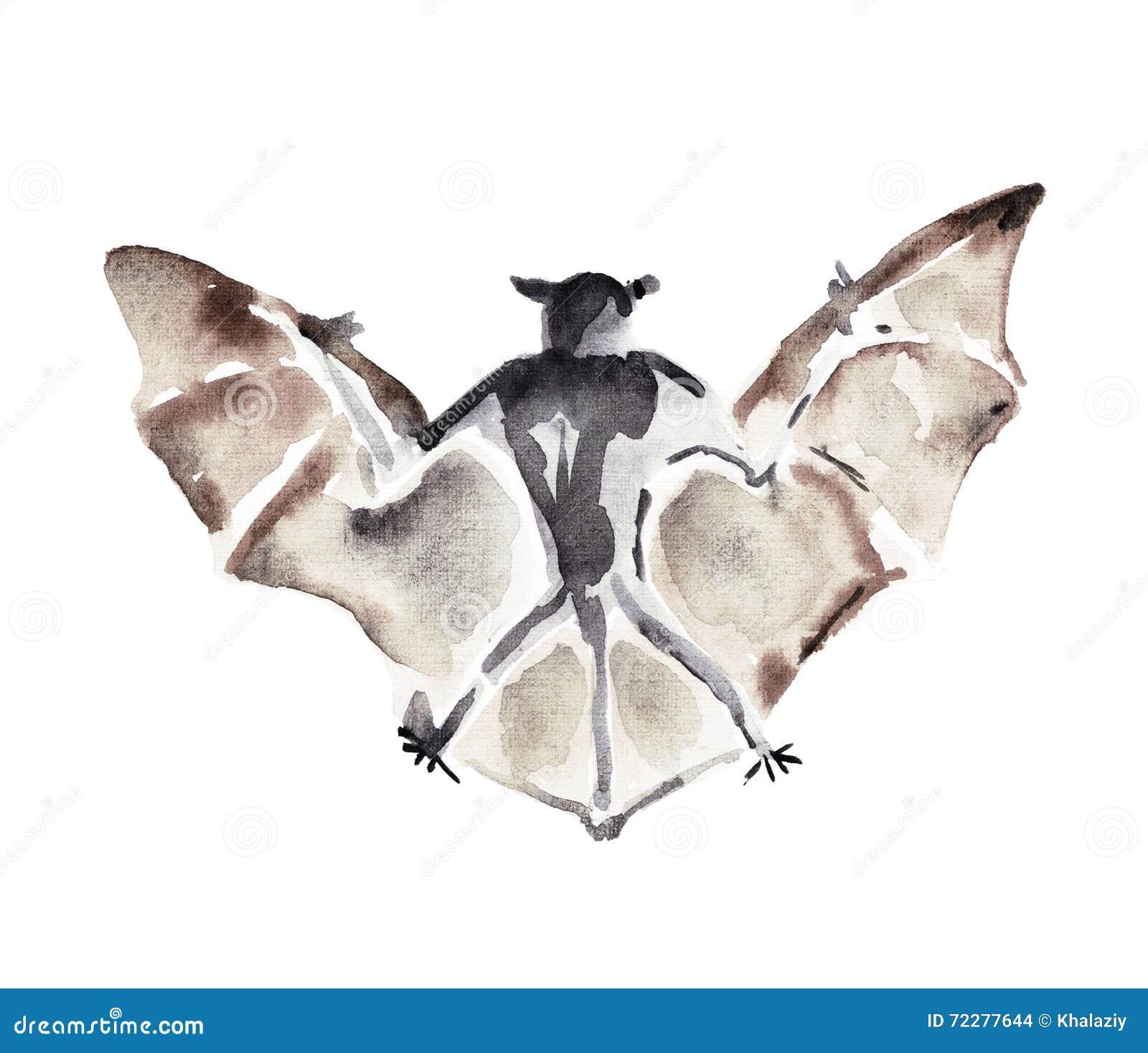 Download Иллюстрация акварели летучей мыши Иллюстрация штока - иллюстрации насчитывающей insignia, элемент: 72277644