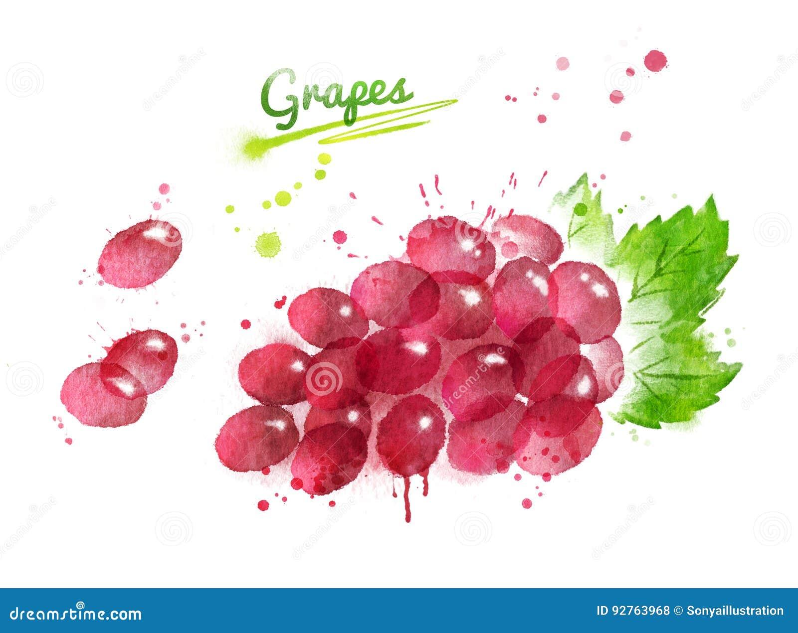 Иллюстрация акварели пука красной виноградины