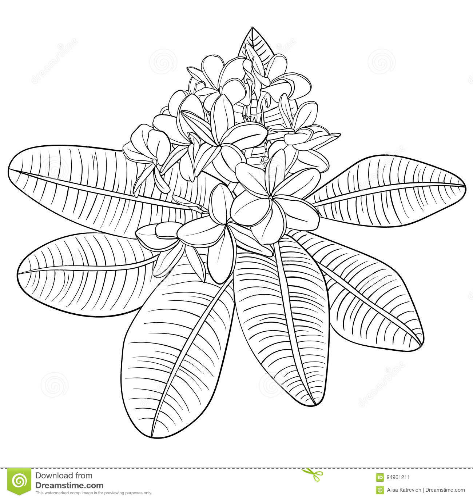 Иллюстрация с цветками и Frangipani plumeria линейно