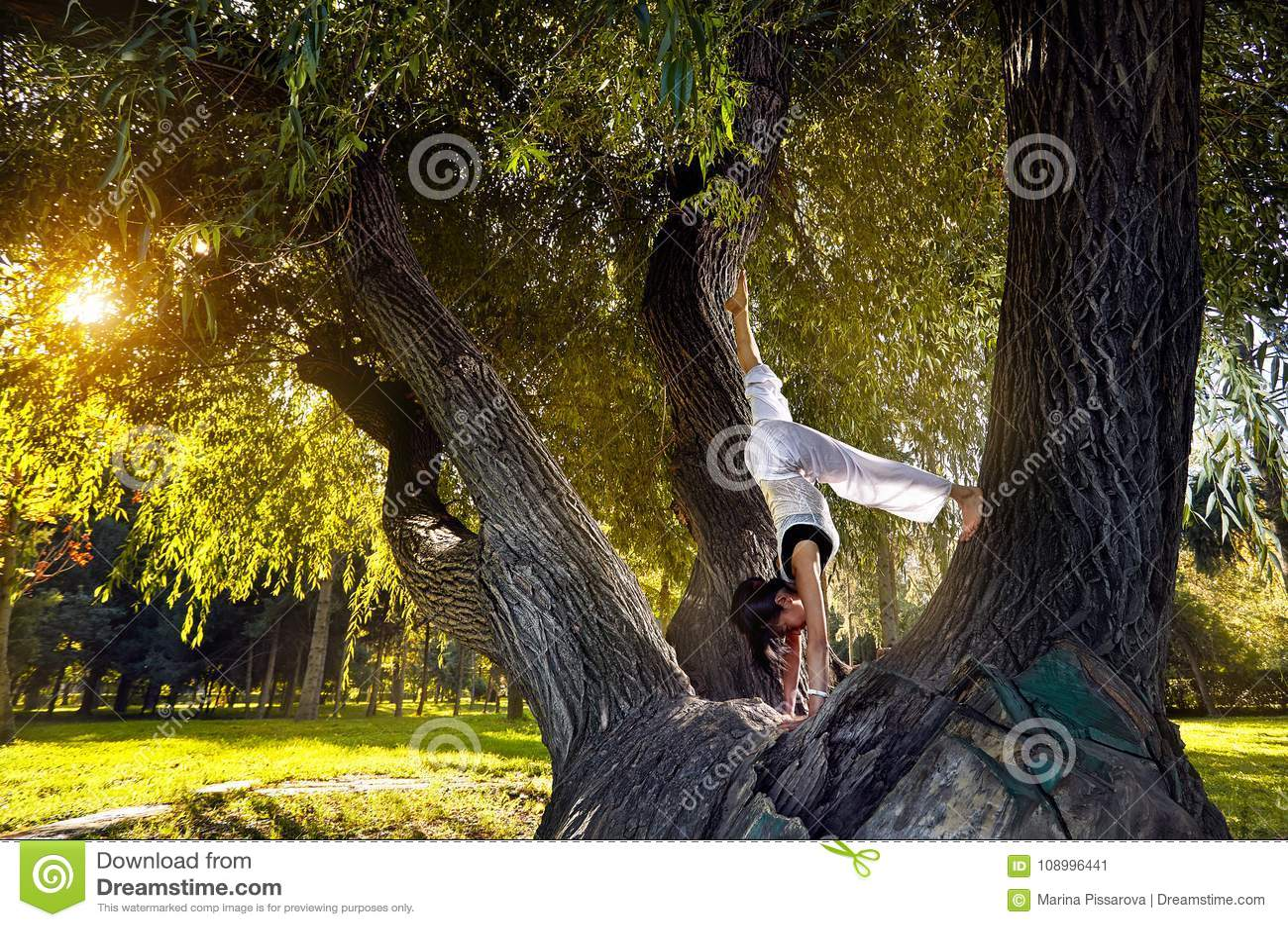 Йога на дереве