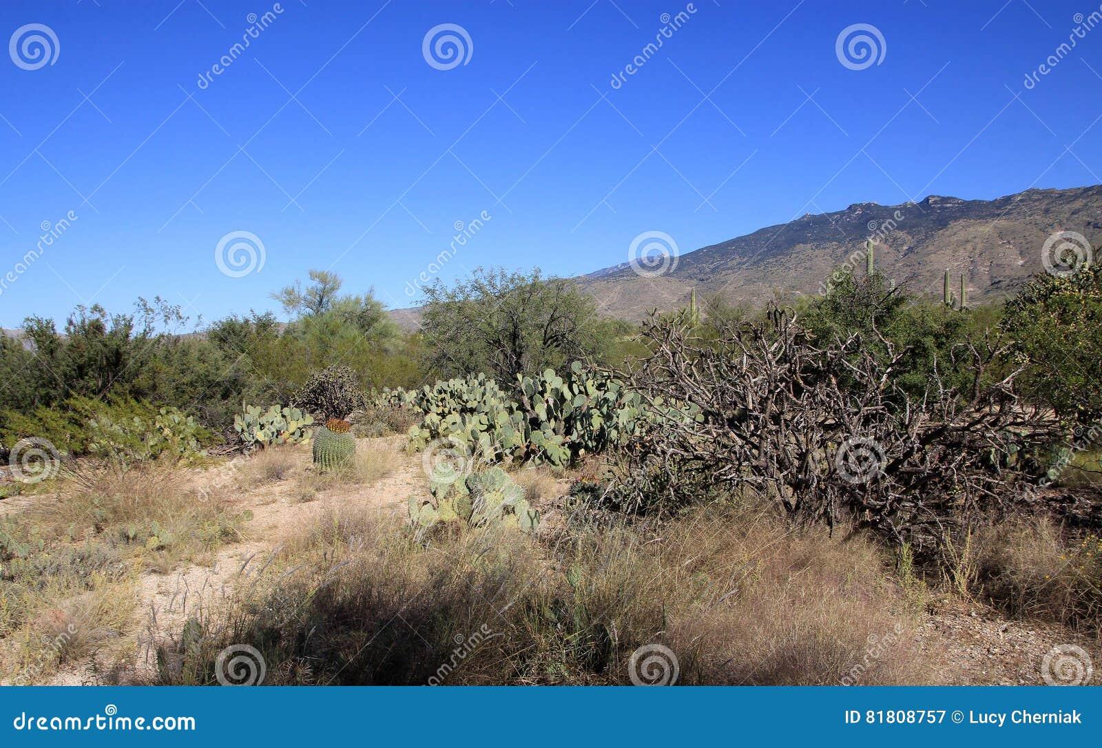 Кактусы в национальном парке