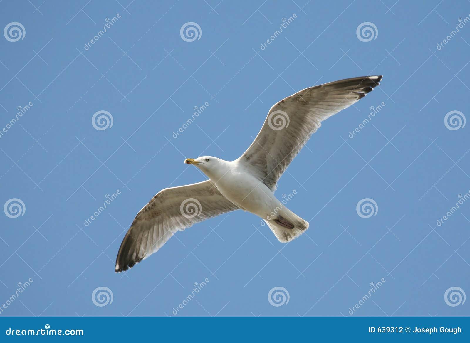 Download как свободно стоковое фото. изображение насчитывающей природа - 639312