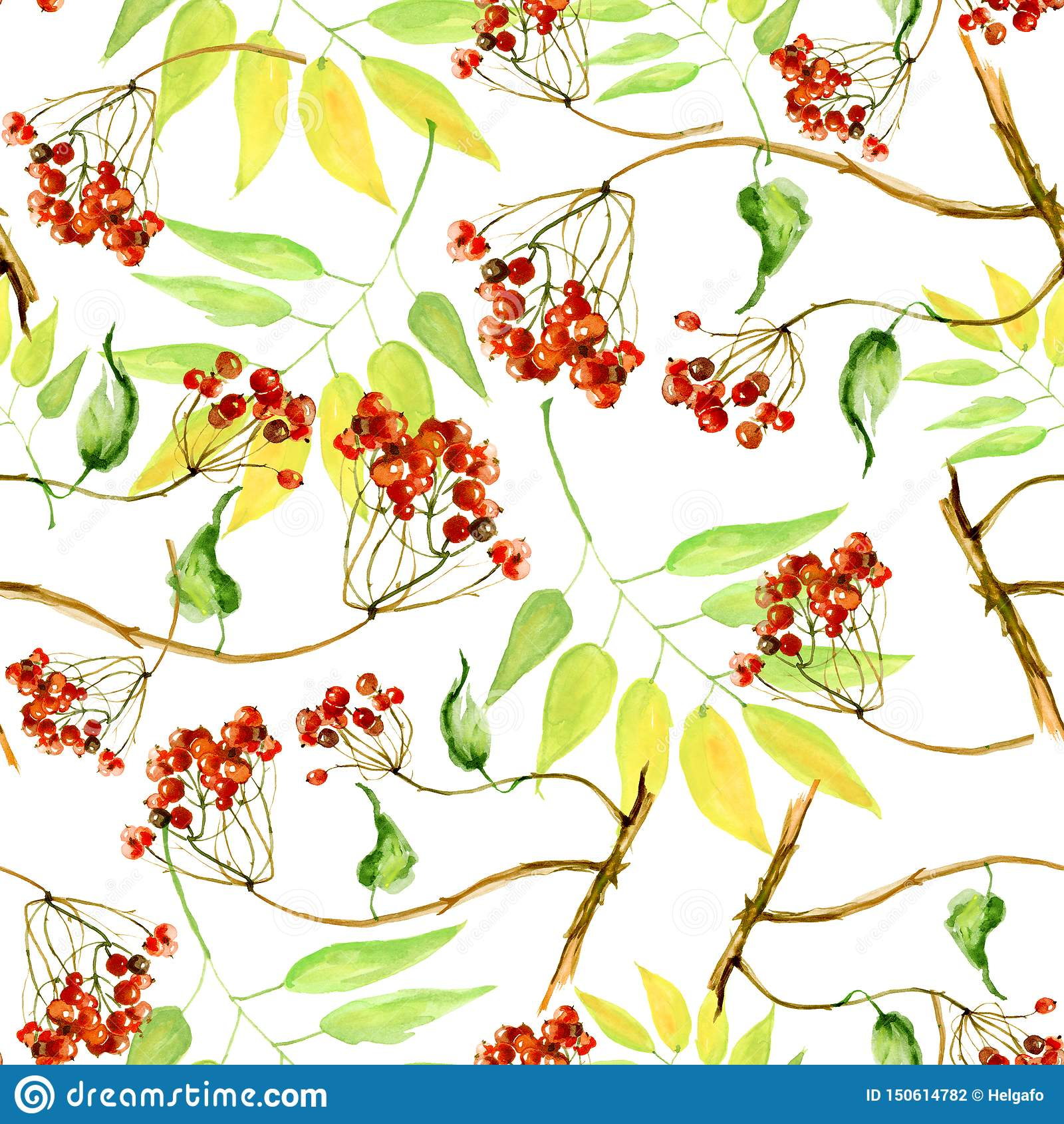 Калина акварели, рябина и старшие ветви безшовная картина, рука покрашенная на белой предпосылке Ветвь, пук красных ягод