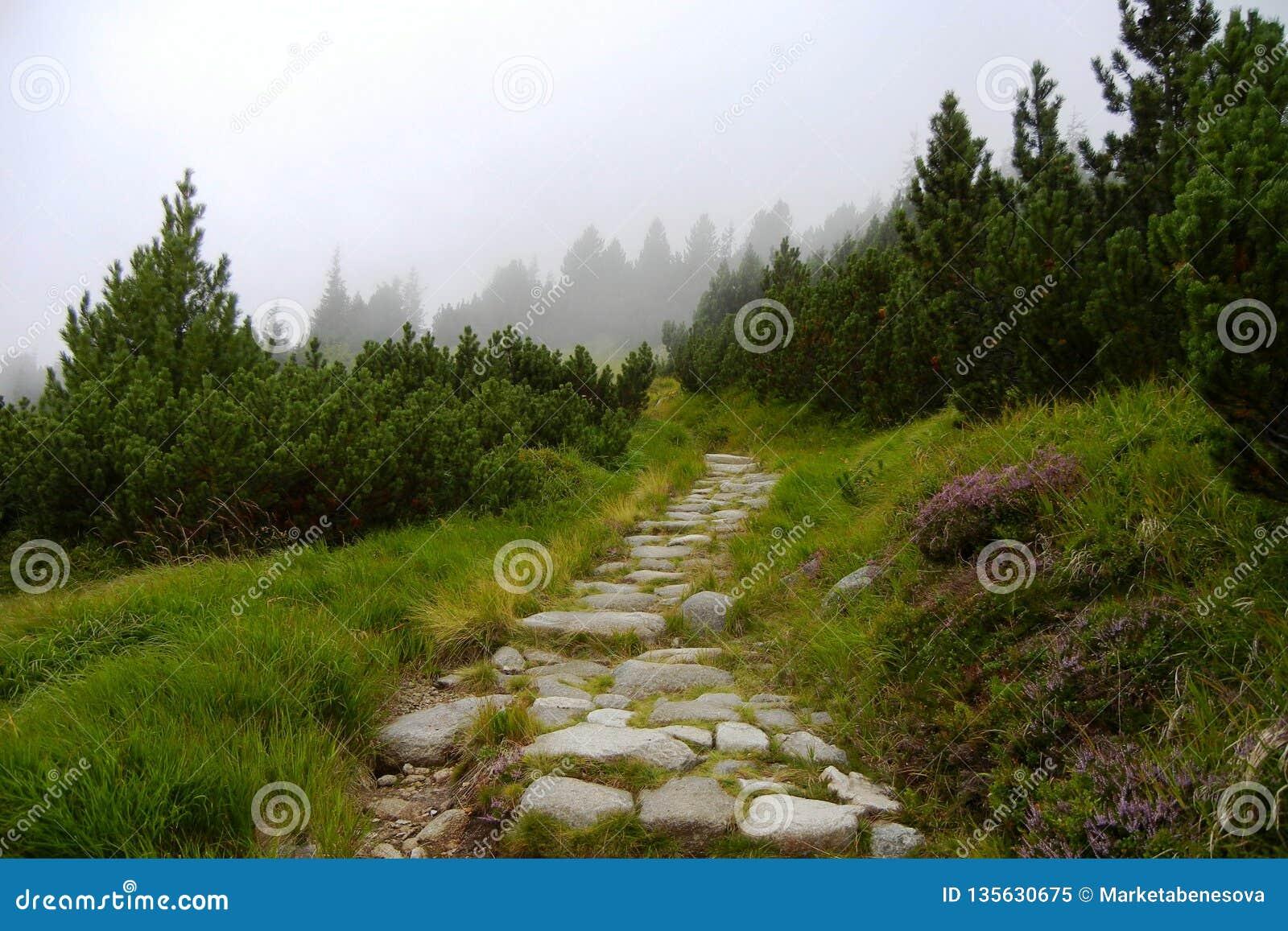 Каменный путь в горах Tatra