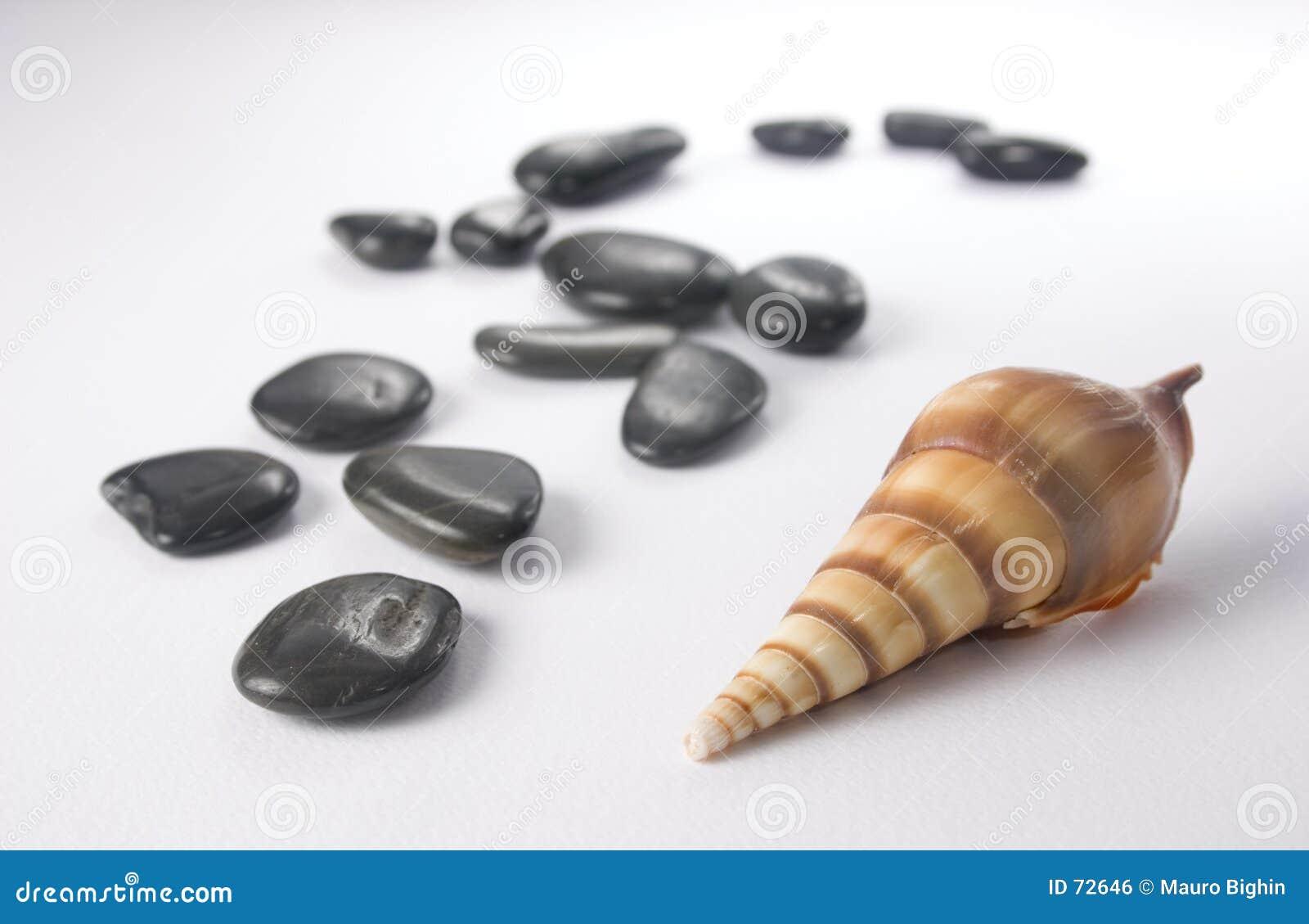камни раковины моря нюха