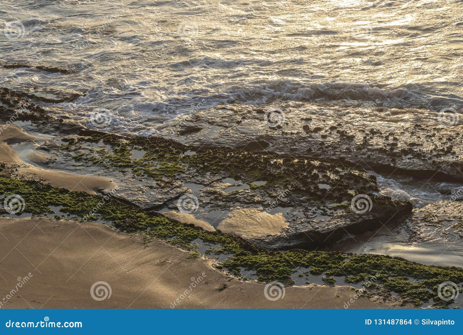 Камни с морской водорослью на береге дикого пляжа namibe с заходом солнца вышесказанного anisette