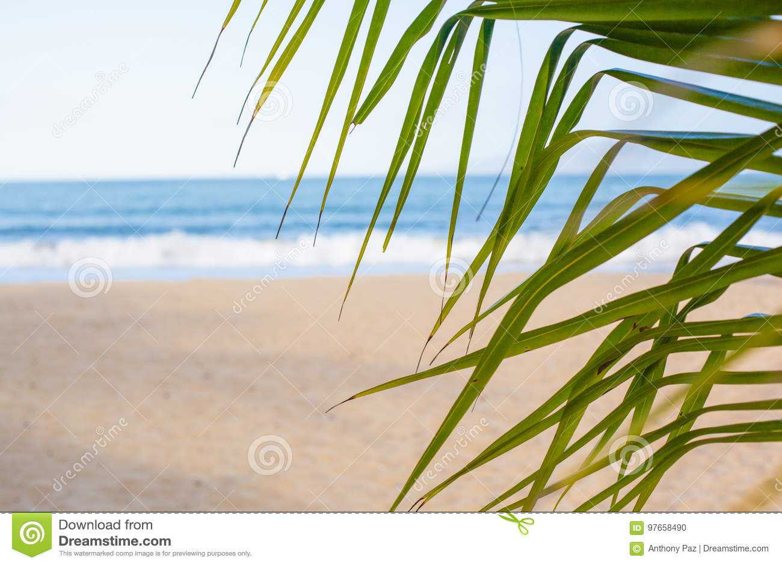 каникула зонтика неба пляжа предпосылки голубая цветастая Пляж с пальмами и голубым морем