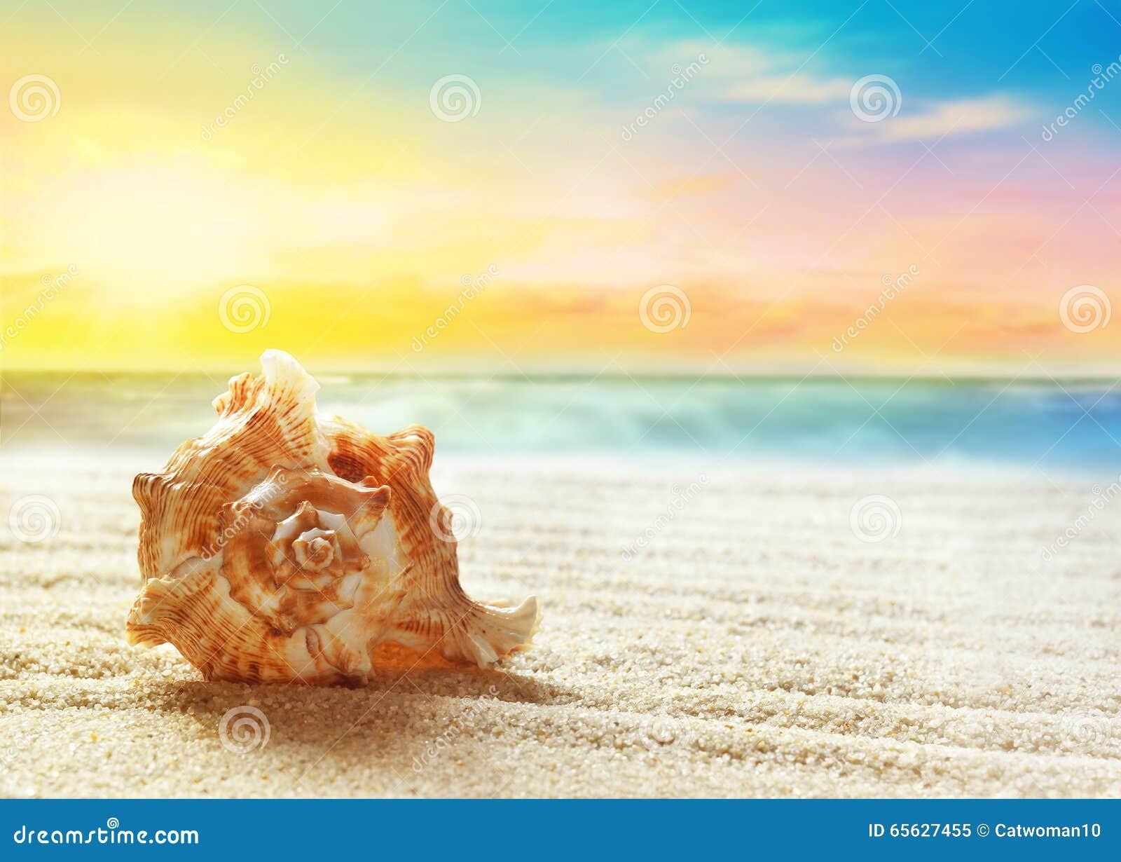 каникула раковины моря принципиальной схемы пляжа песочная