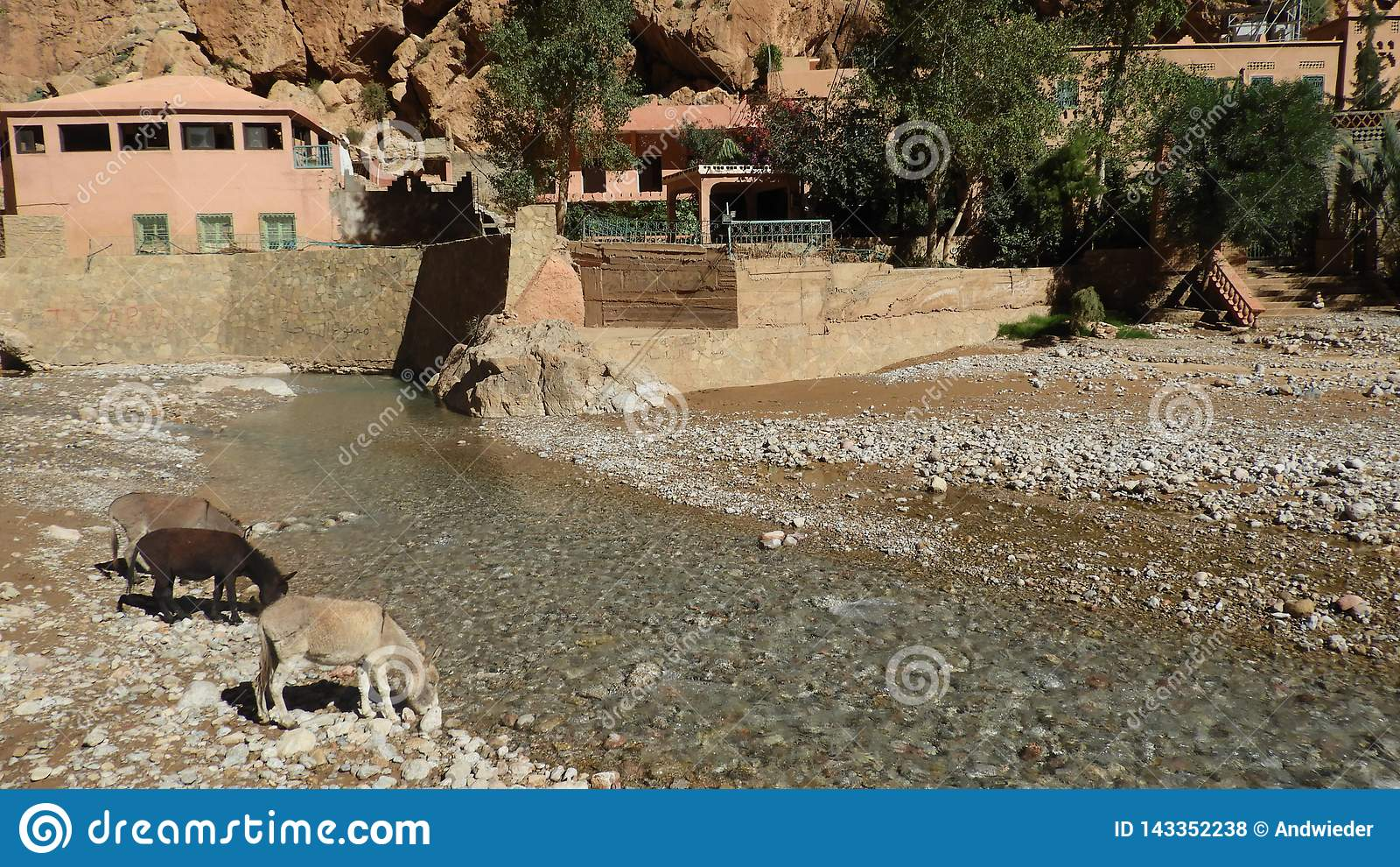 Каньон в Maroc с ослами на реке