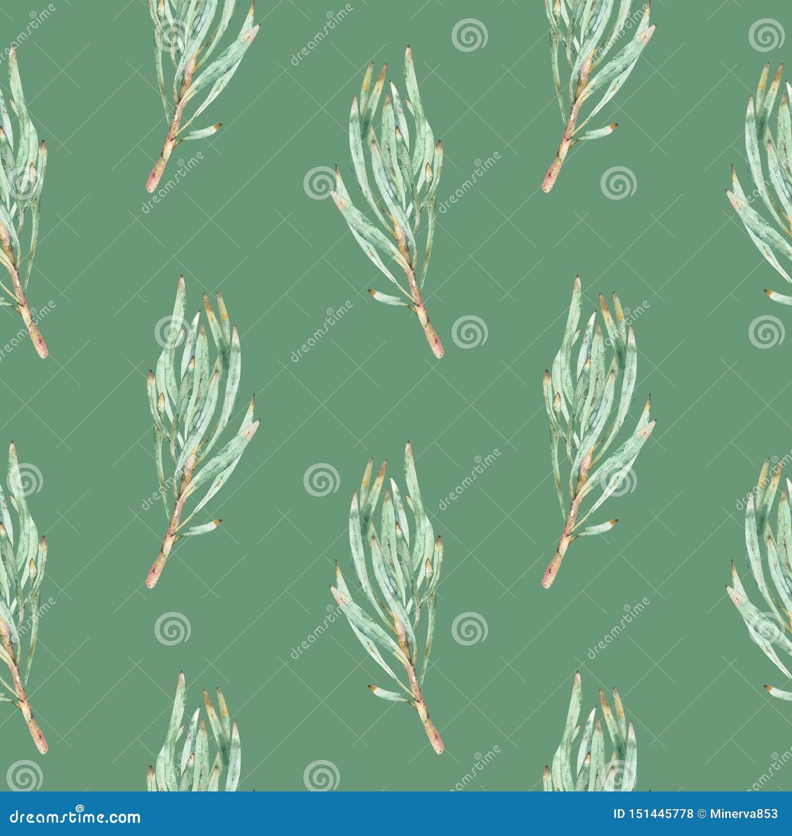 Картина акварели безшовная зеленых листьев protea