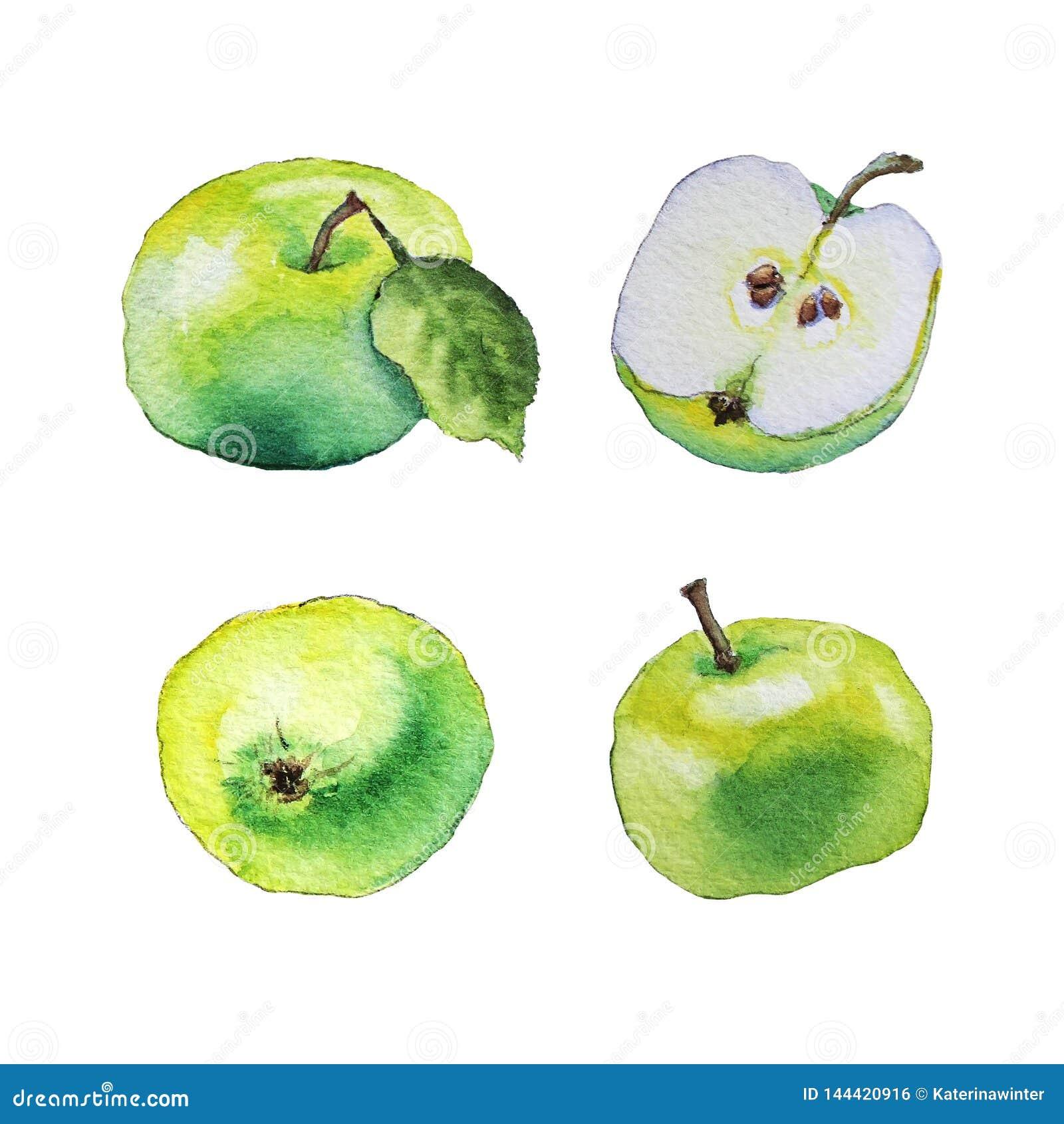 Картина акварели зеленых яблок