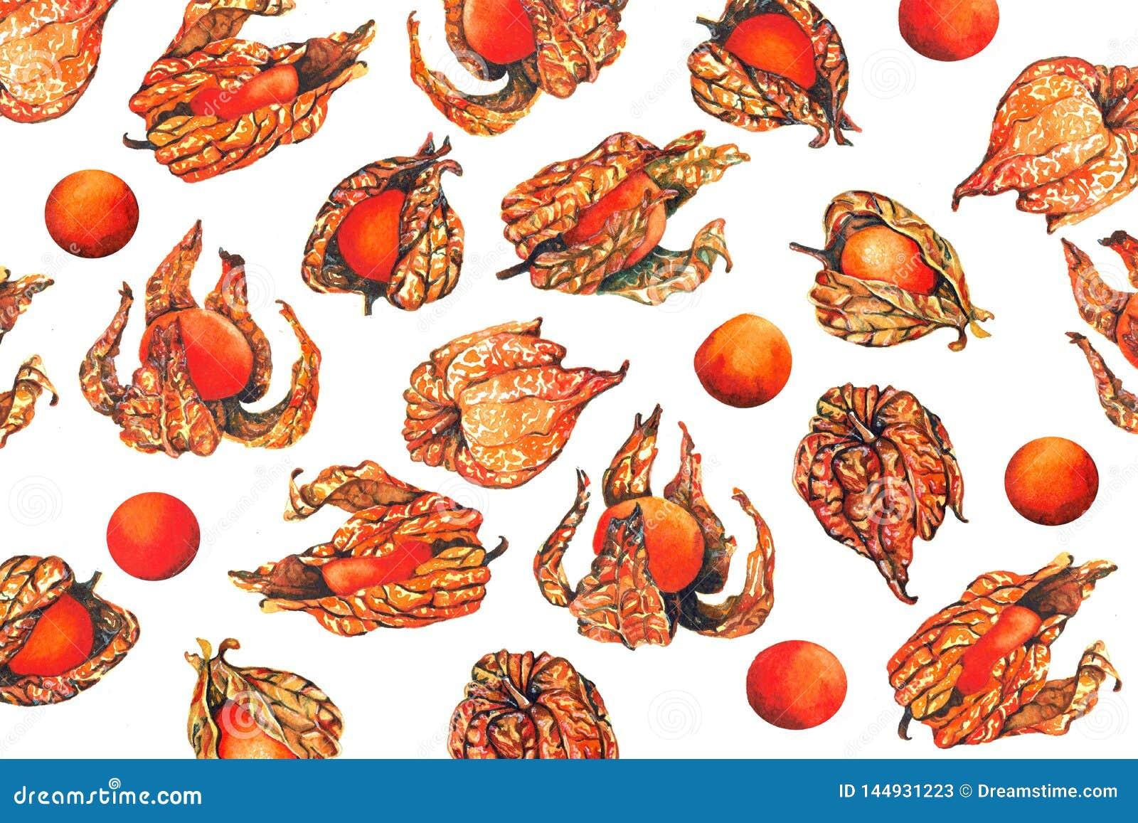 Картина акварели ягоды плода физалиса
