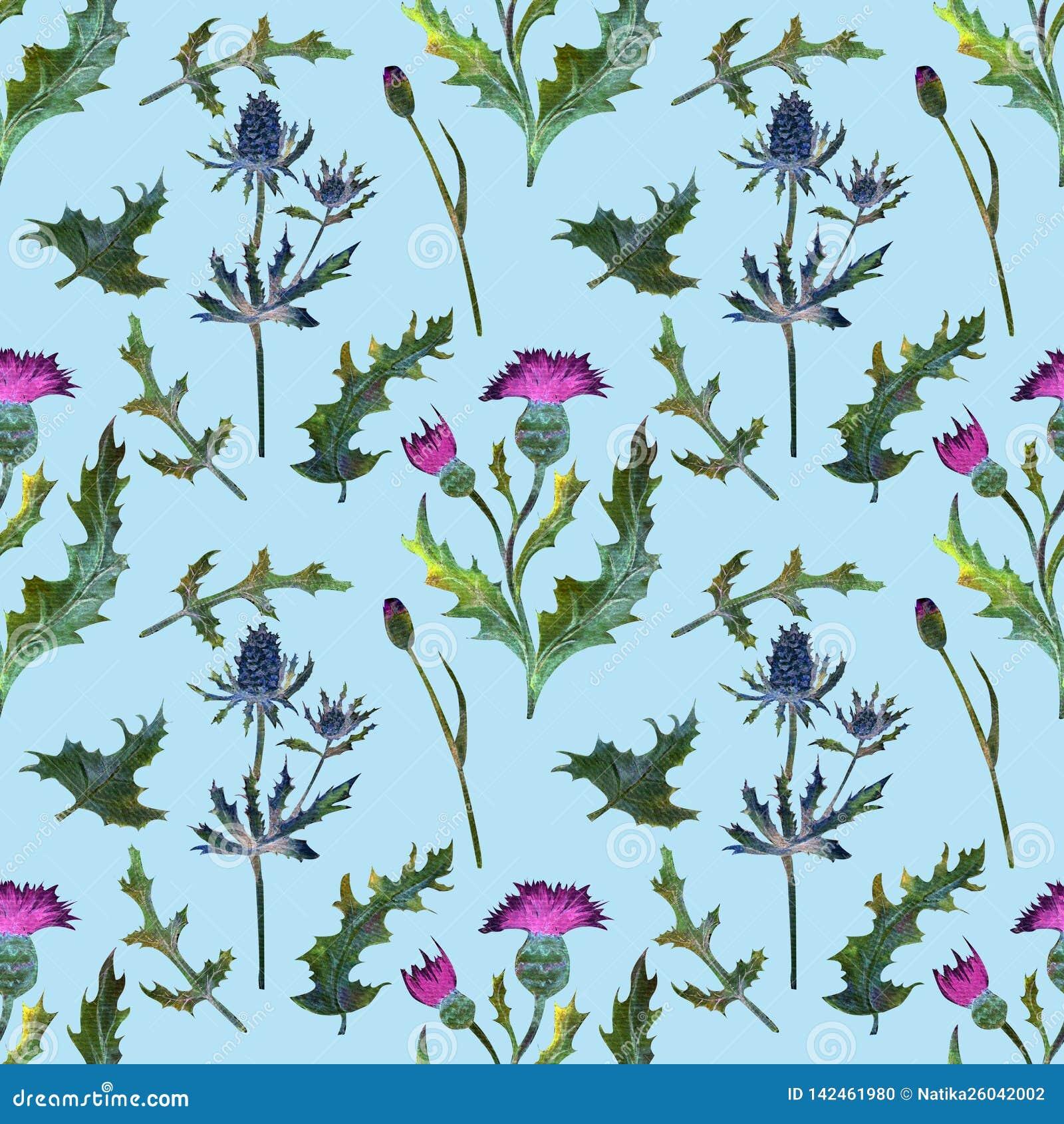 картина безшовная Wildflowers на сини Изображение лета изображение иллюстрации летания клюва декоративное своя бумажная акварель