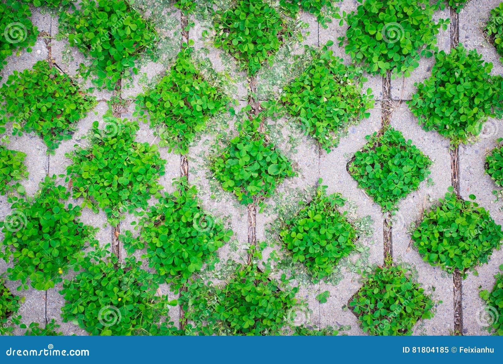 Картина, зеленые засорители заполняет кладя плитки пола