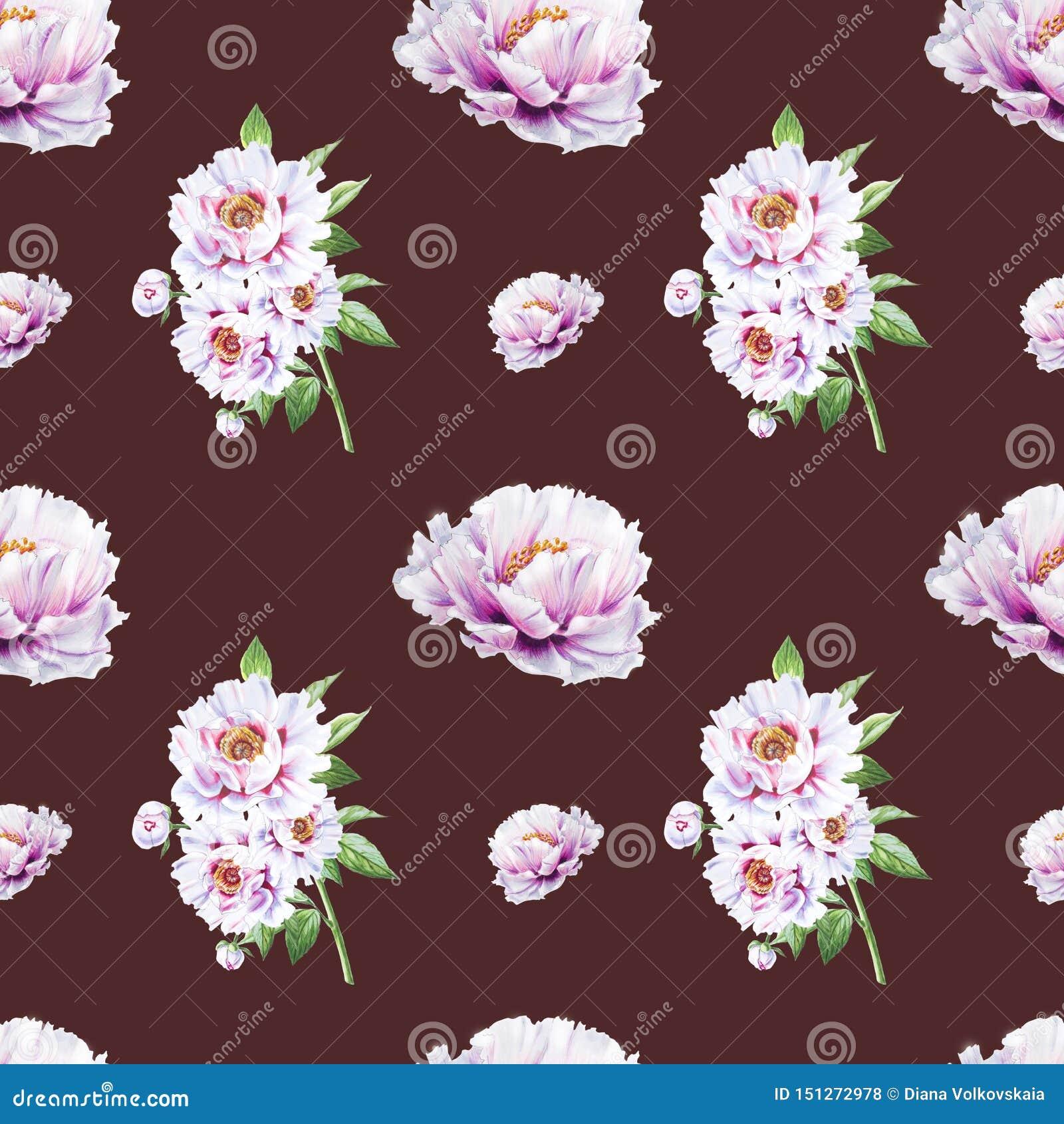 Картина красивого белого пиона безшовная E Флористическая текстура Чертеж отметки