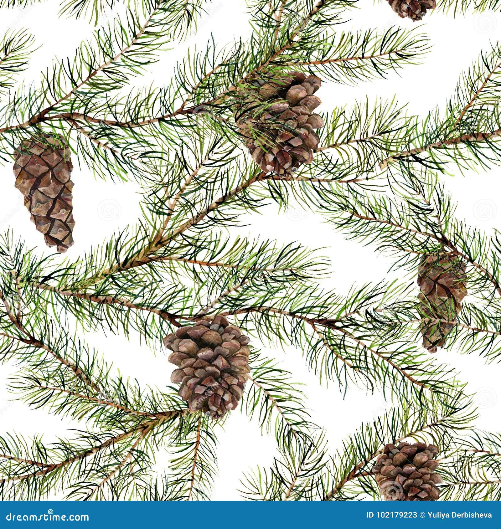 Картина сосны акварели безшовная Вручите покрашенную ветвь ели при конус сосны изолированный на белой предпосылке средства