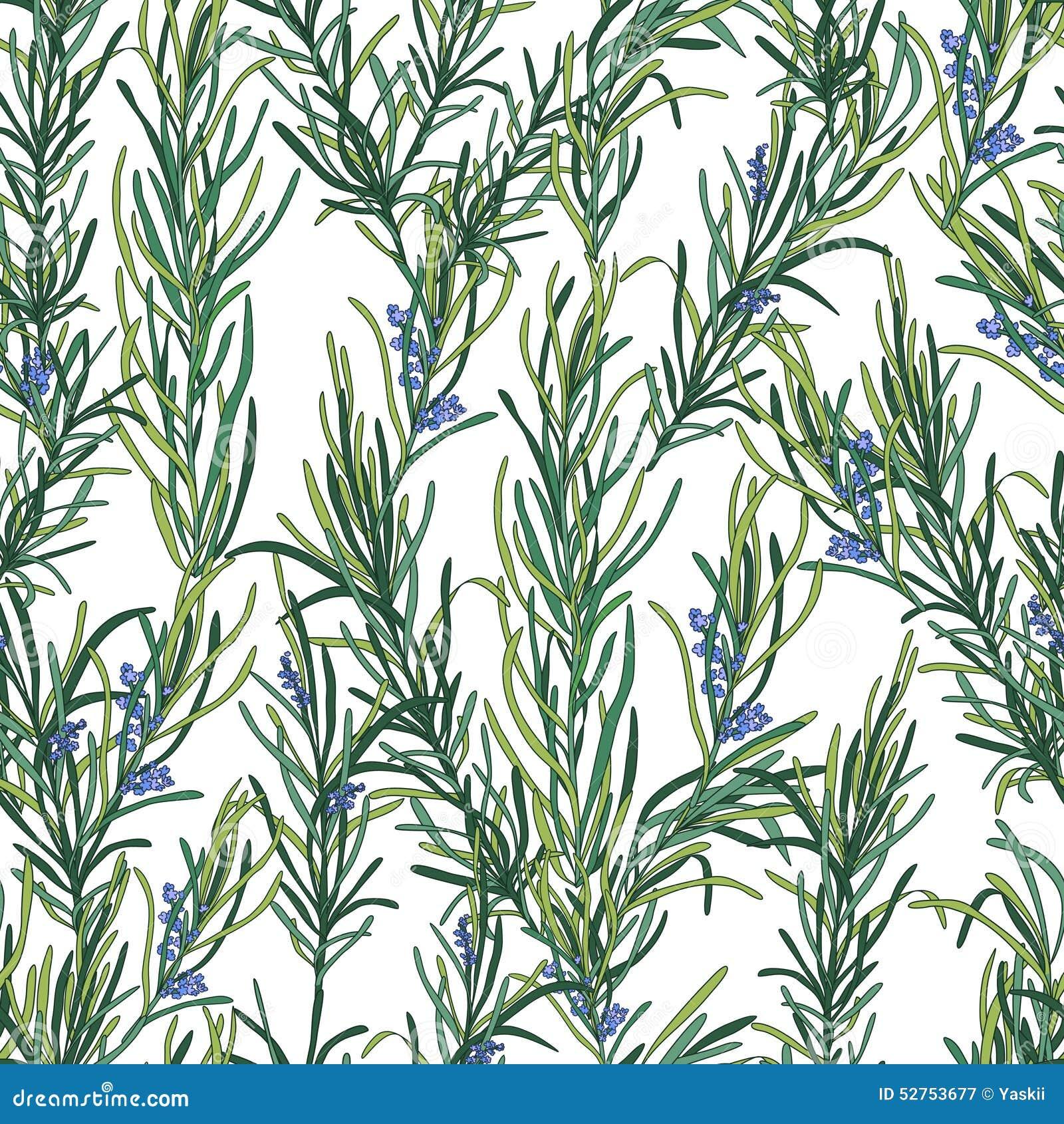 Картина травы Розмари Иллюстрация ...: ru.dreamstime.com/иллюстрация-Ñ...
