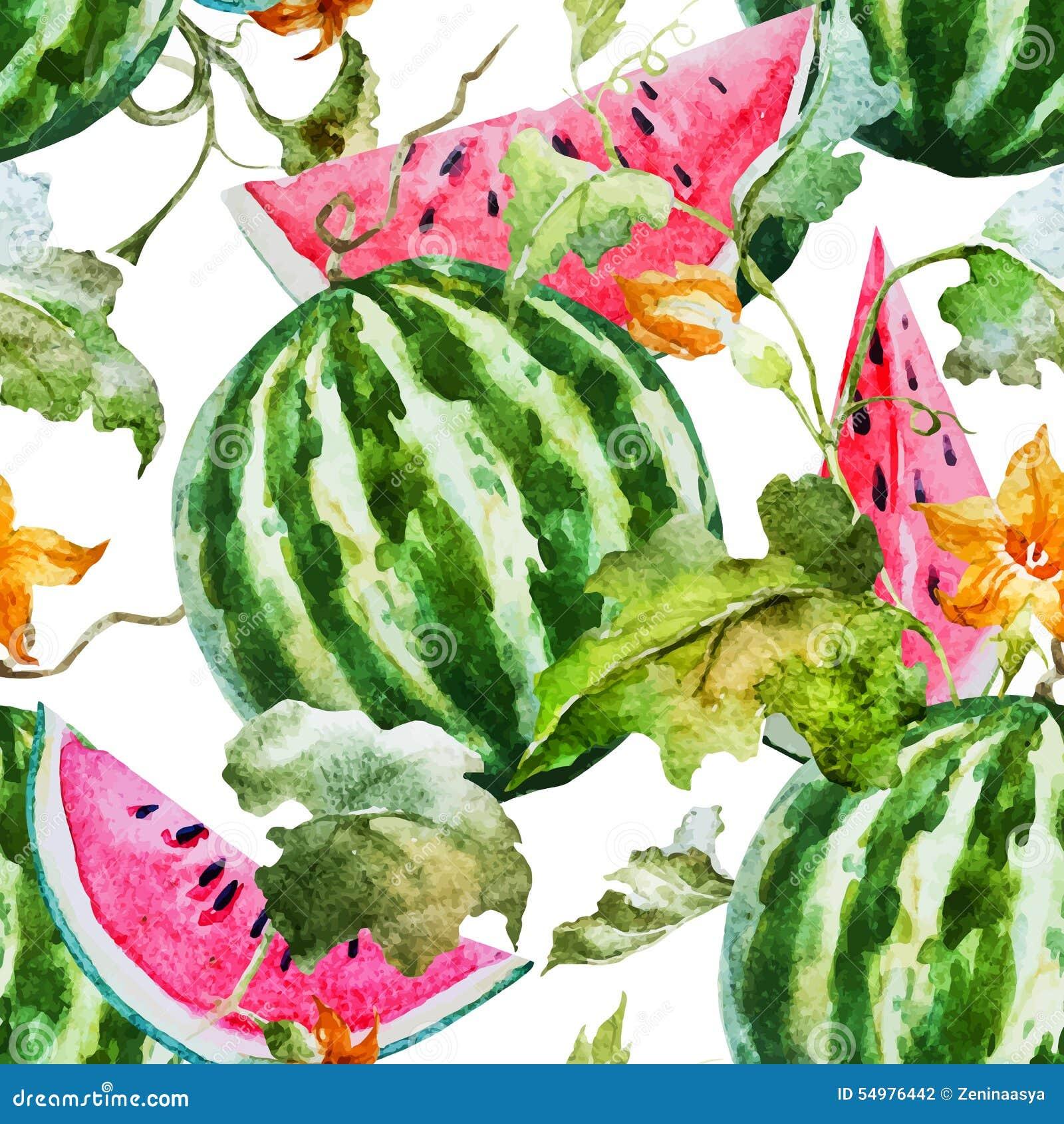 Картина дыни арбуза акварели