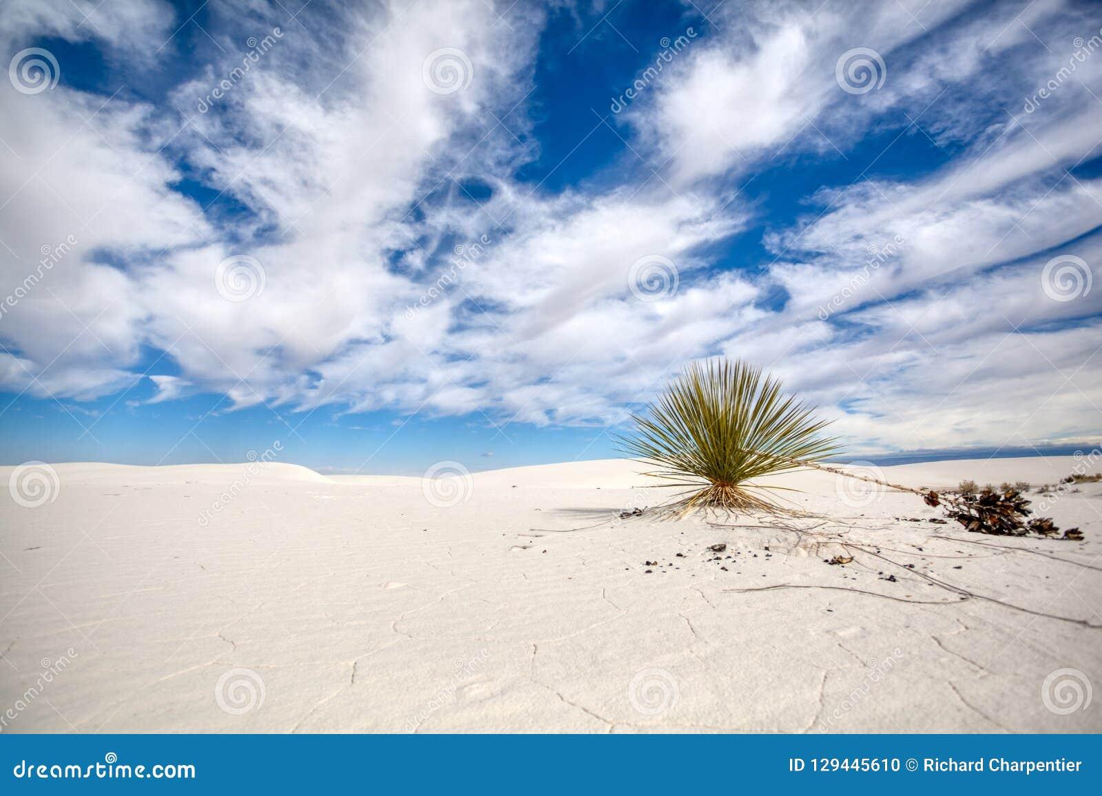 Картины в песке на белом национальном монументе песков