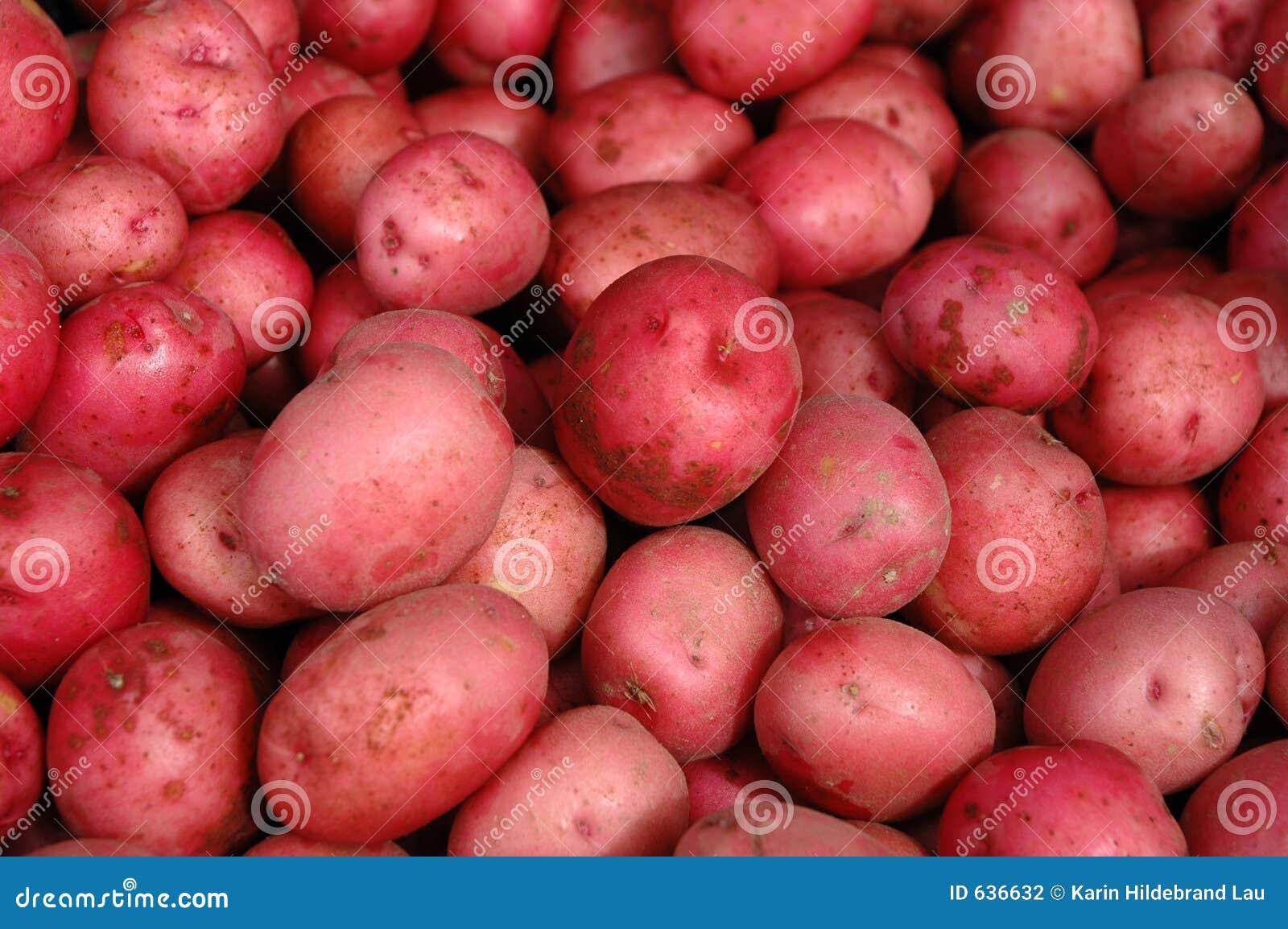 Download картошки красные стоковое фото. изображение насчитывающей сырцово - 636632
