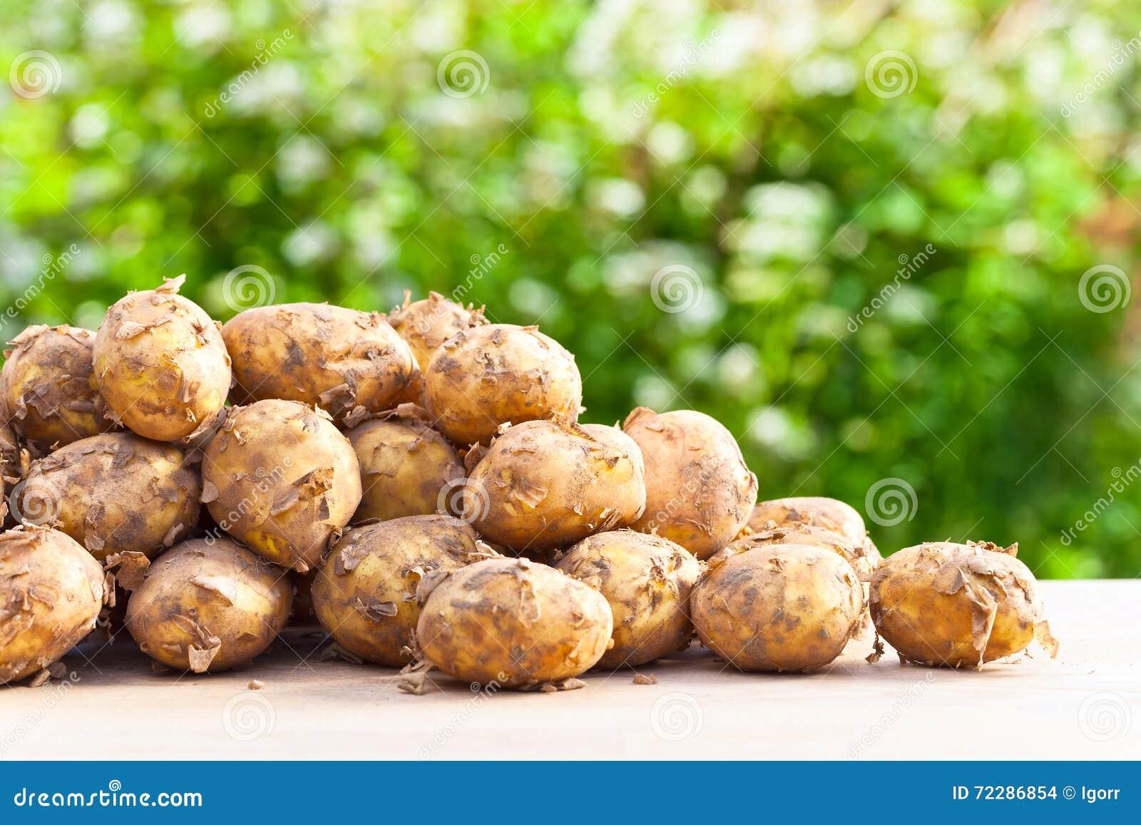 Download картошки сырцовые стоковое фото. изображение насчитывающей урожай - 72286854
