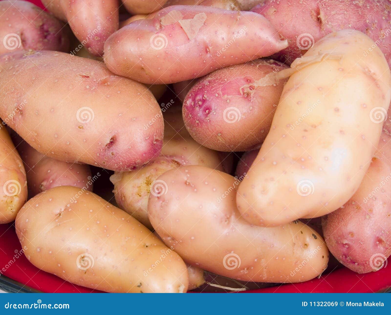 картошки fingerling подняли