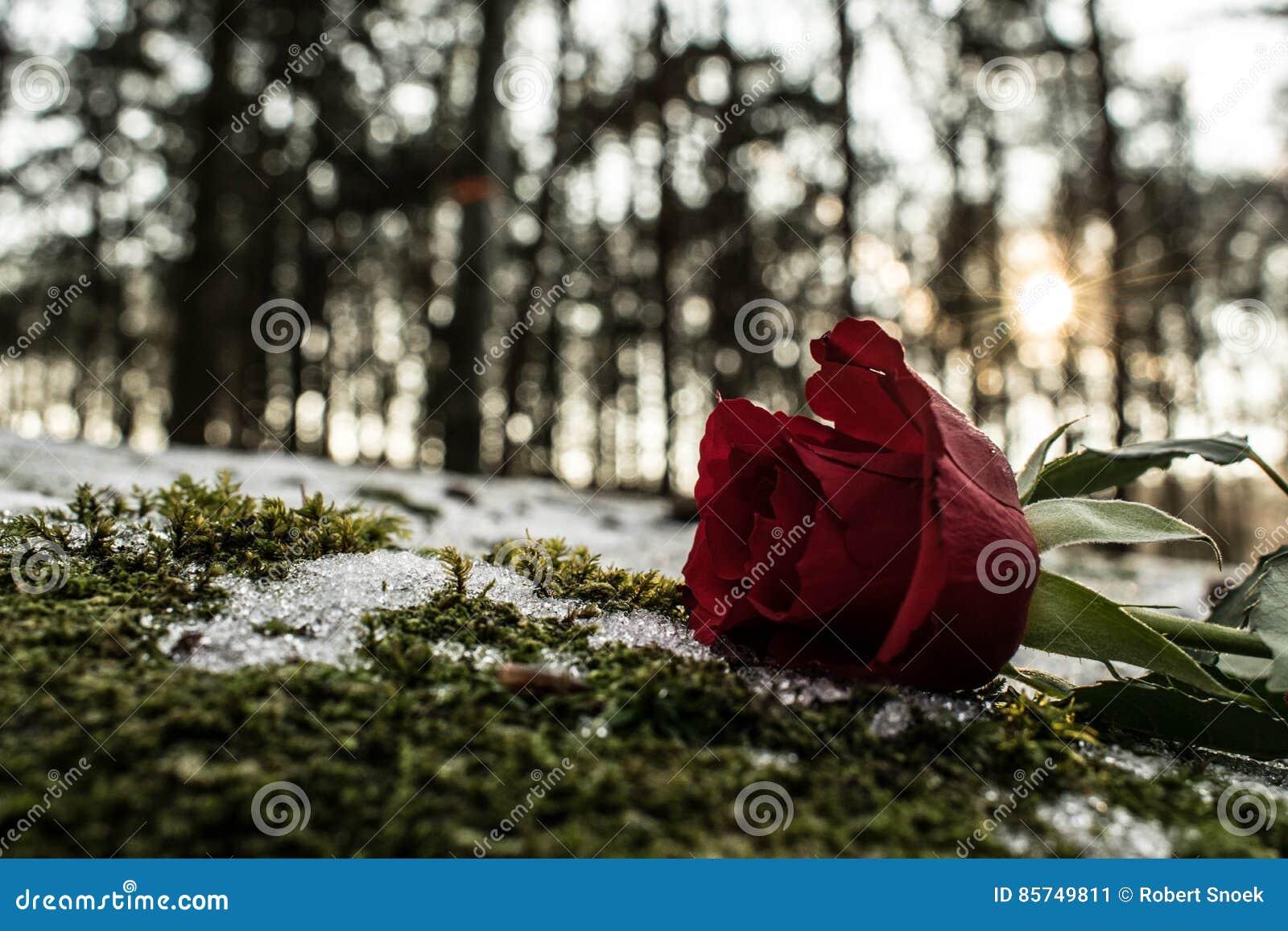 Касание розы