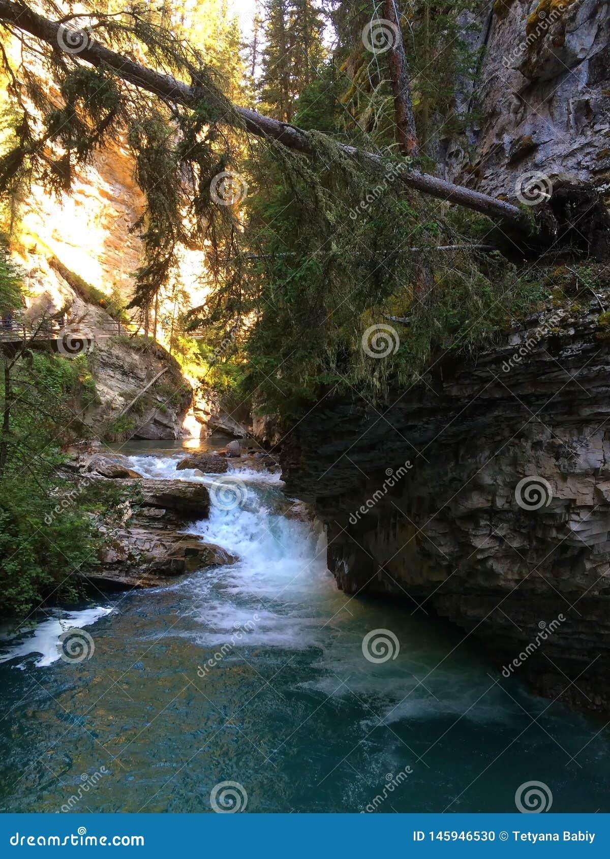 Каскад воды и падая дерево в сценарном каньоне Johnston, национальном парке Banff