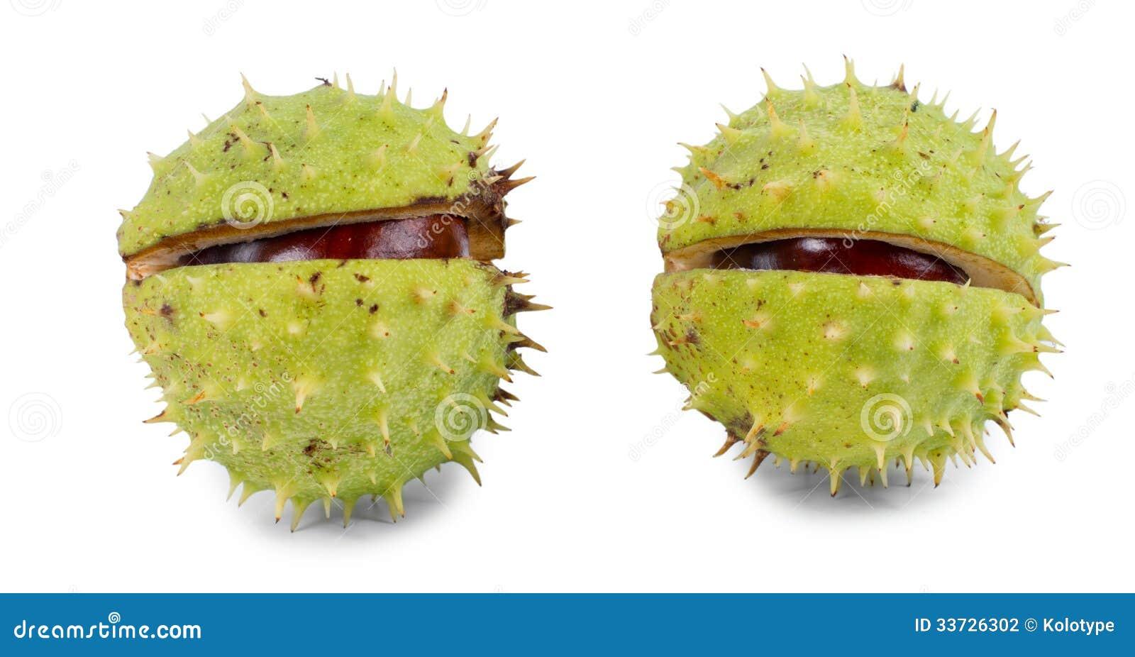 Каштаны в их наружном зеленом заусенце