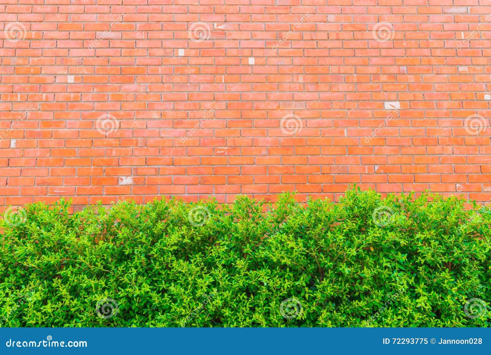 Download Кирпичная стена с зелеными растениями Стоковое Изображение - изображение насчитывающей конкретно, ретро: 72293775