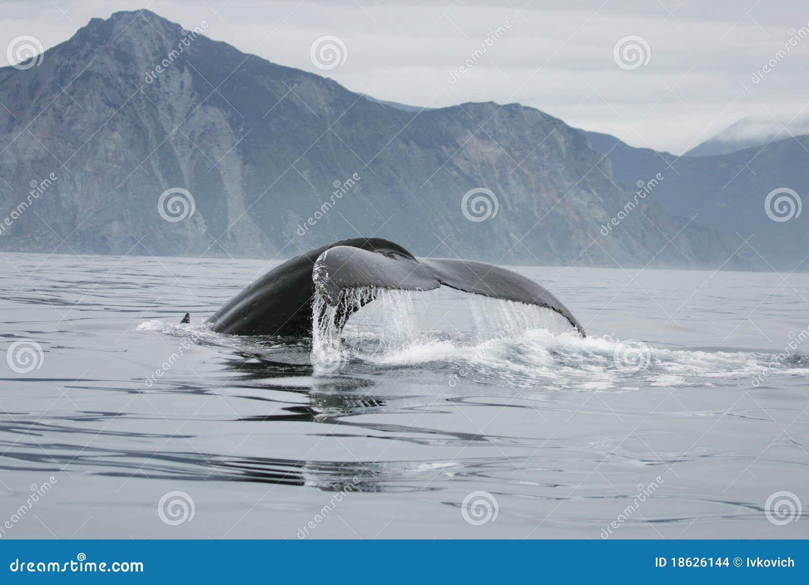 кит кабеля