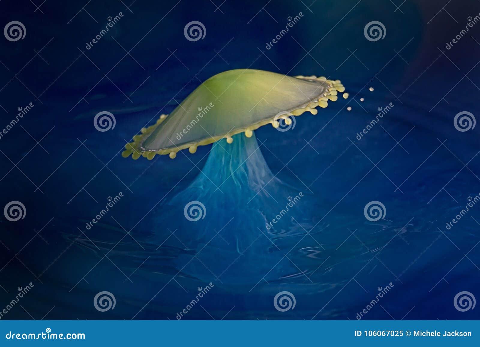 Классическое столкновение падения воды формируя зонтик
