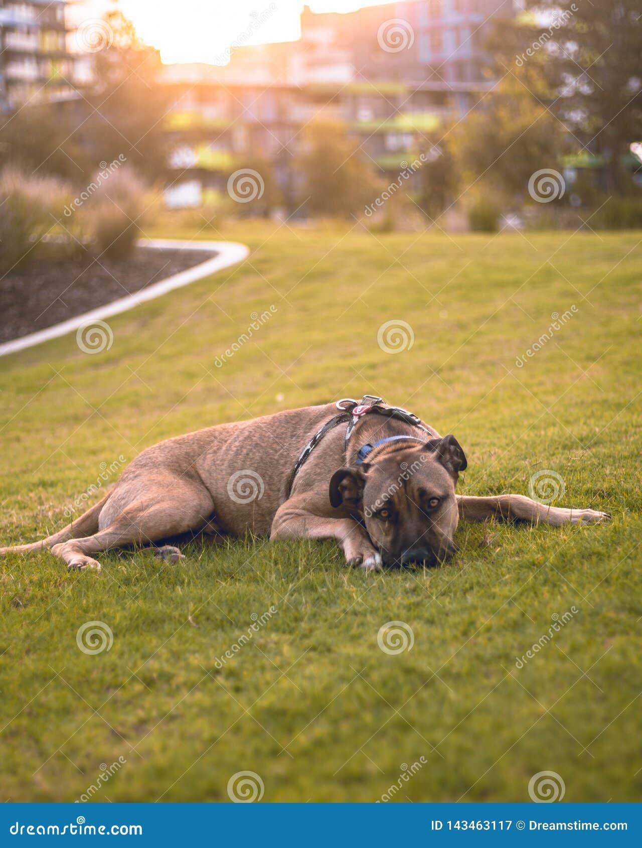 Класть собаку